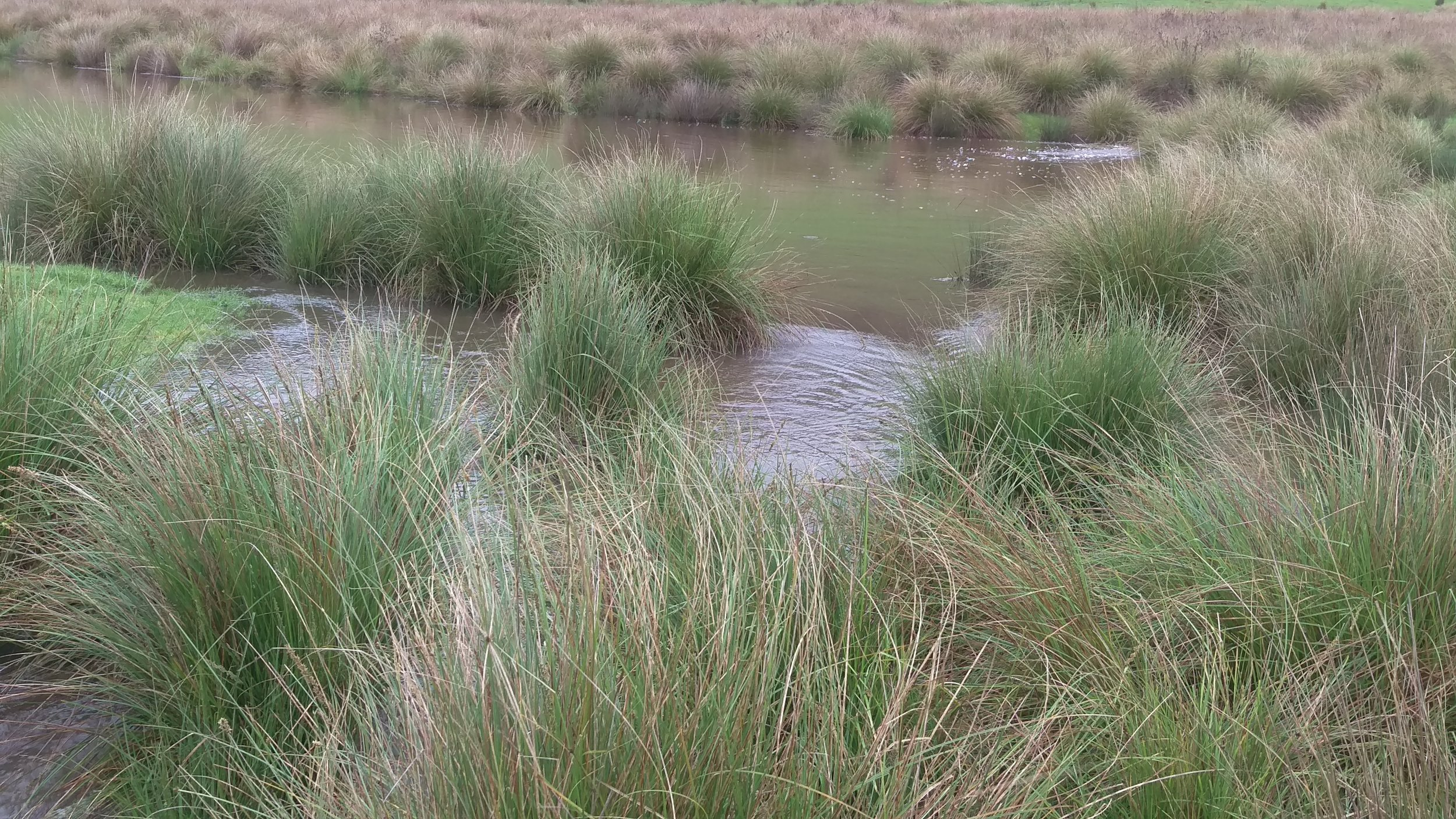 Carex slowing down the potentially eroding power of water