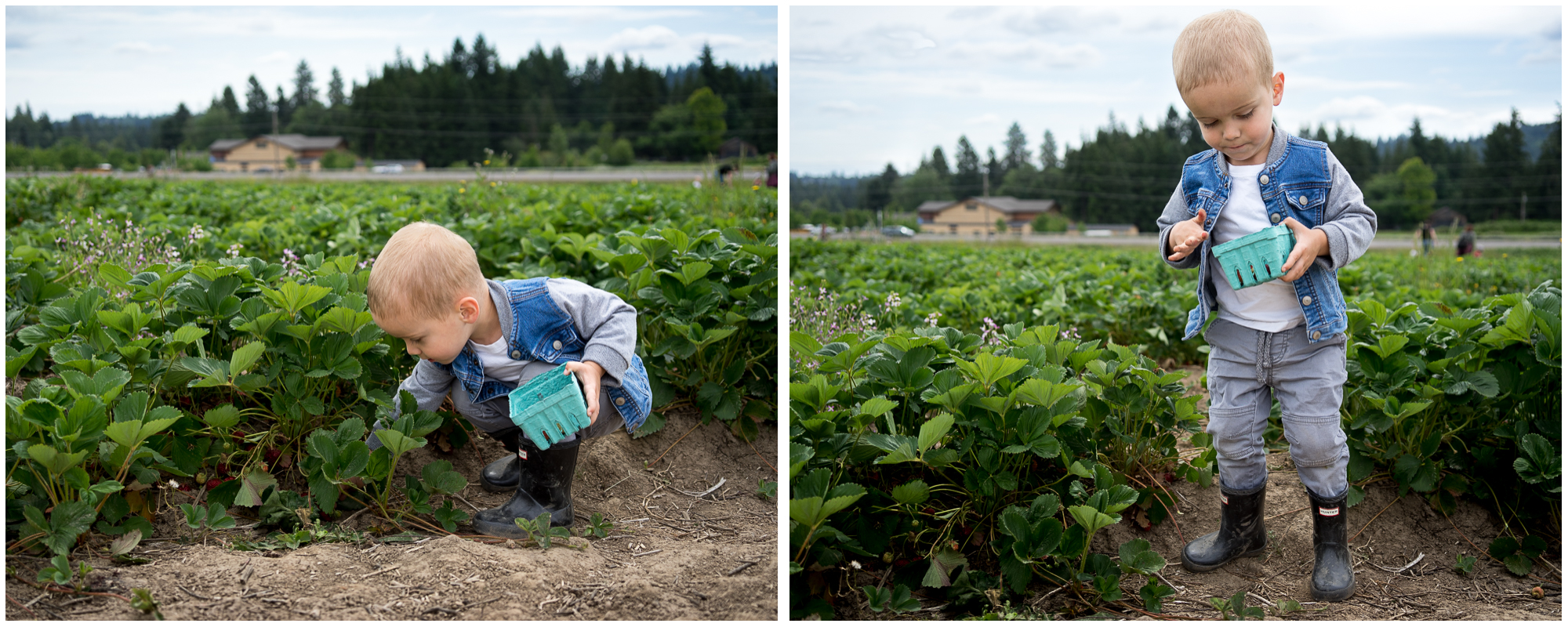 Portland Berry Picking