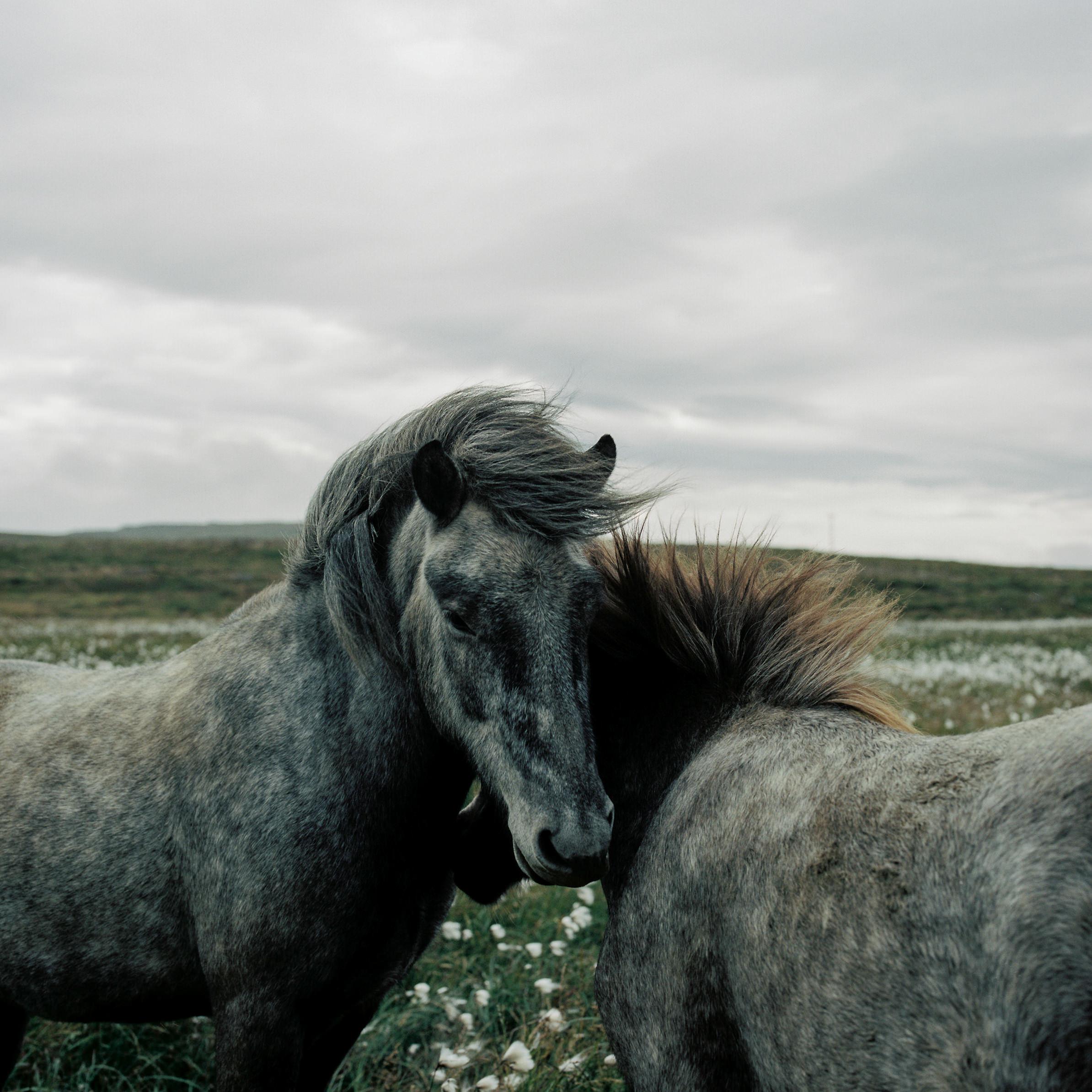 Hasselblad Iceland-40_mini.JPG