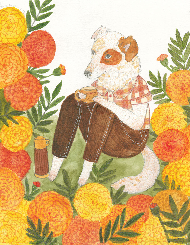 Marigold - Watercolour & Pencil