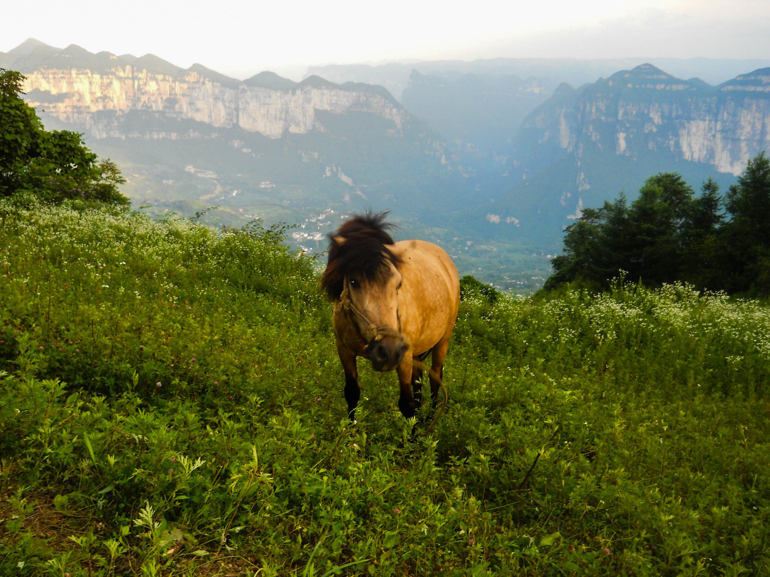 This is my favorite because, well look it! Why wouldn't it be anyone's favorite? A horse, wild flowers, and a backdrop of pure wonder.