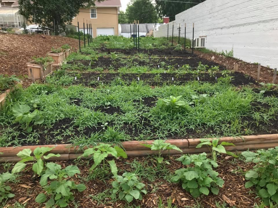 weedy garden.jpg
