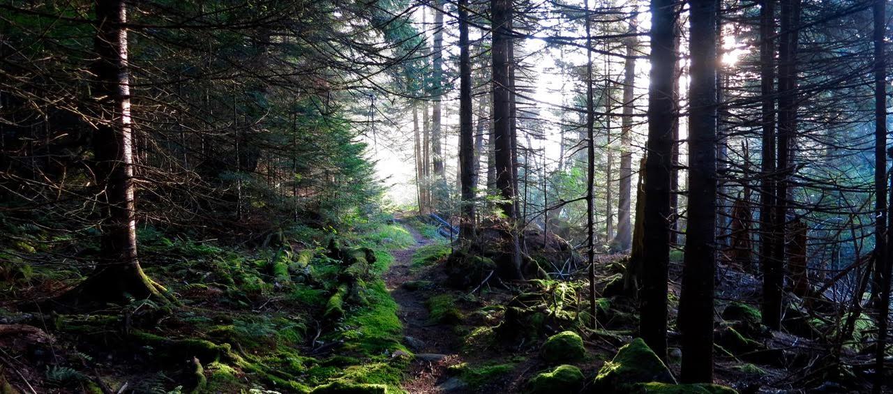 deep_woods.jpg
