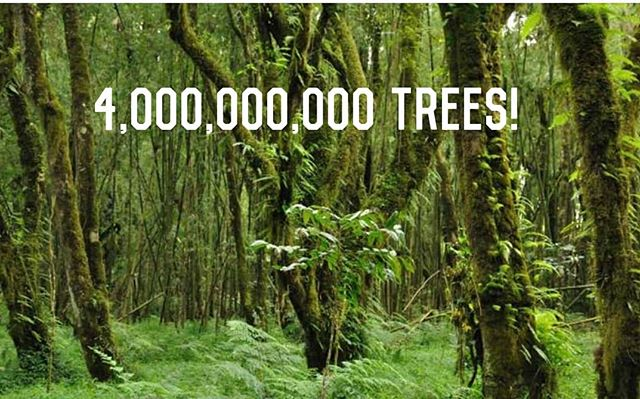 Global Conservation Stories: . . Incredible news from #Ethiopia. Prime Minister Abiy Ahmed has officially launched a national tree planting project aimed at planting 4 billion trees in Ethiopia.  Deforestation in Ethiopia and all over the globe are causing devastating environmental effects which are directly affecting humans. In 2017 for example 2 million animals died in Ethiopia as a result or drought emanating from lack of rainfall. One of the cause of this  localised climate change is due to lack of sufficient trees.  Kudos to this Prime Minister! . . . #Ethiopia #climatechange #deforestation #reforestation #rainfall #drought #floods #economy