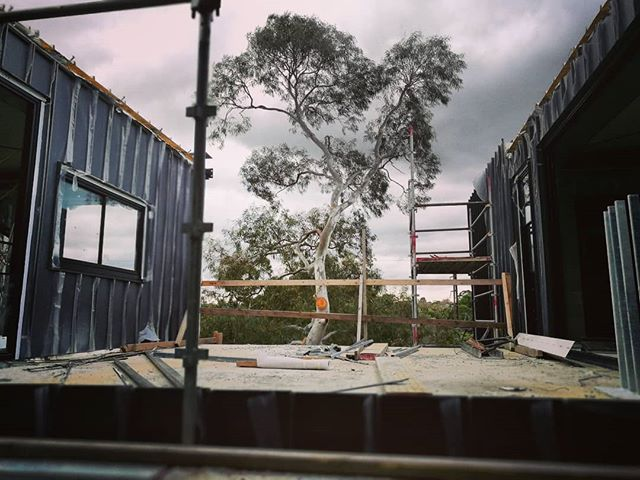 So glad that we kept this beautiful gum tree 😘 . . . . . . . . . . . . . . #urbournearchitecture #office #sitevisit #australian #gumtree