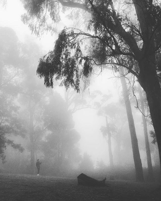 ready for a walk @ Kalorama Park . . . . . . . . . #park #rainyday #walk #kaloramapark #blackandwhite #landscape