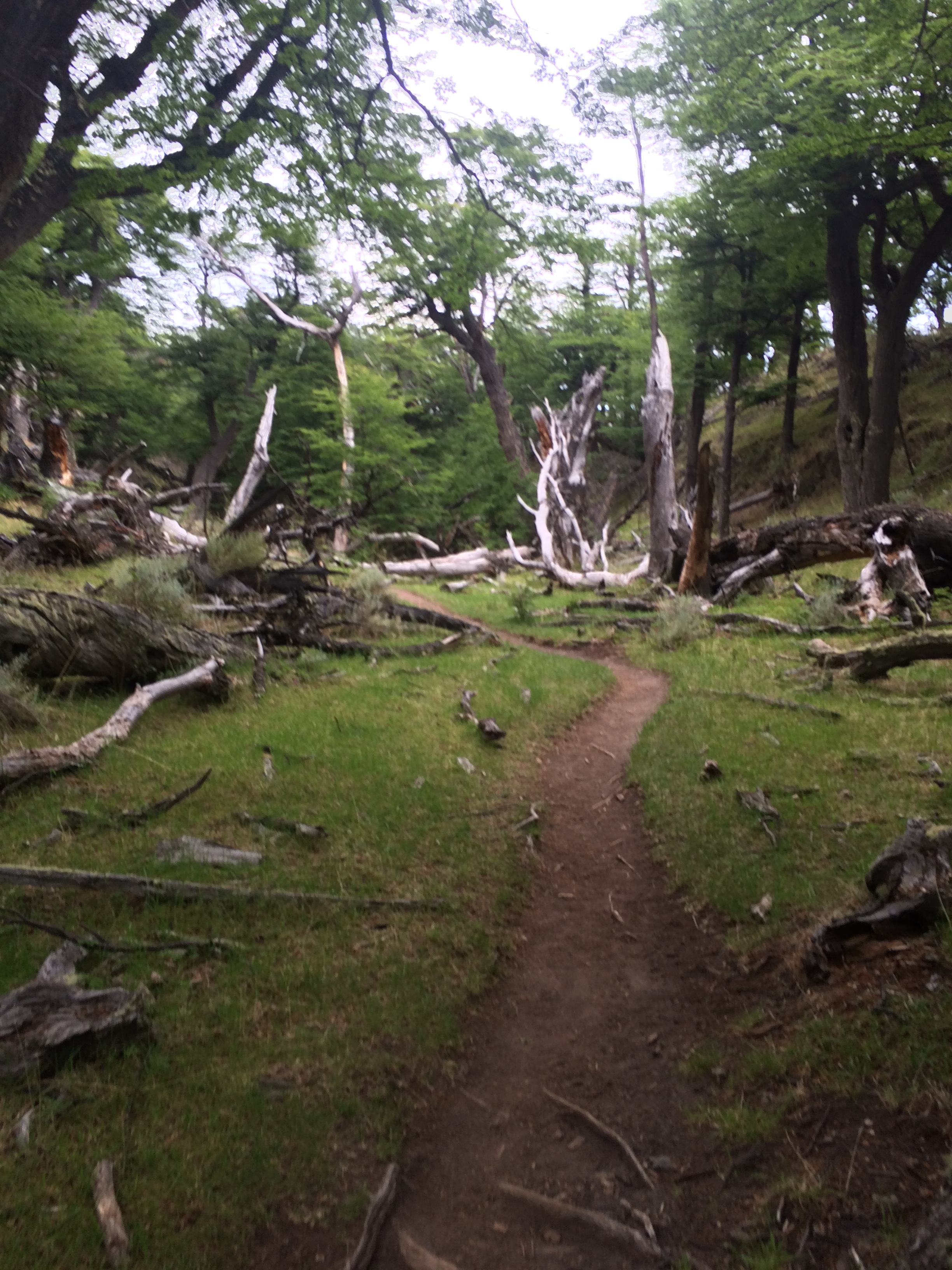 The trail to Fitz Roy