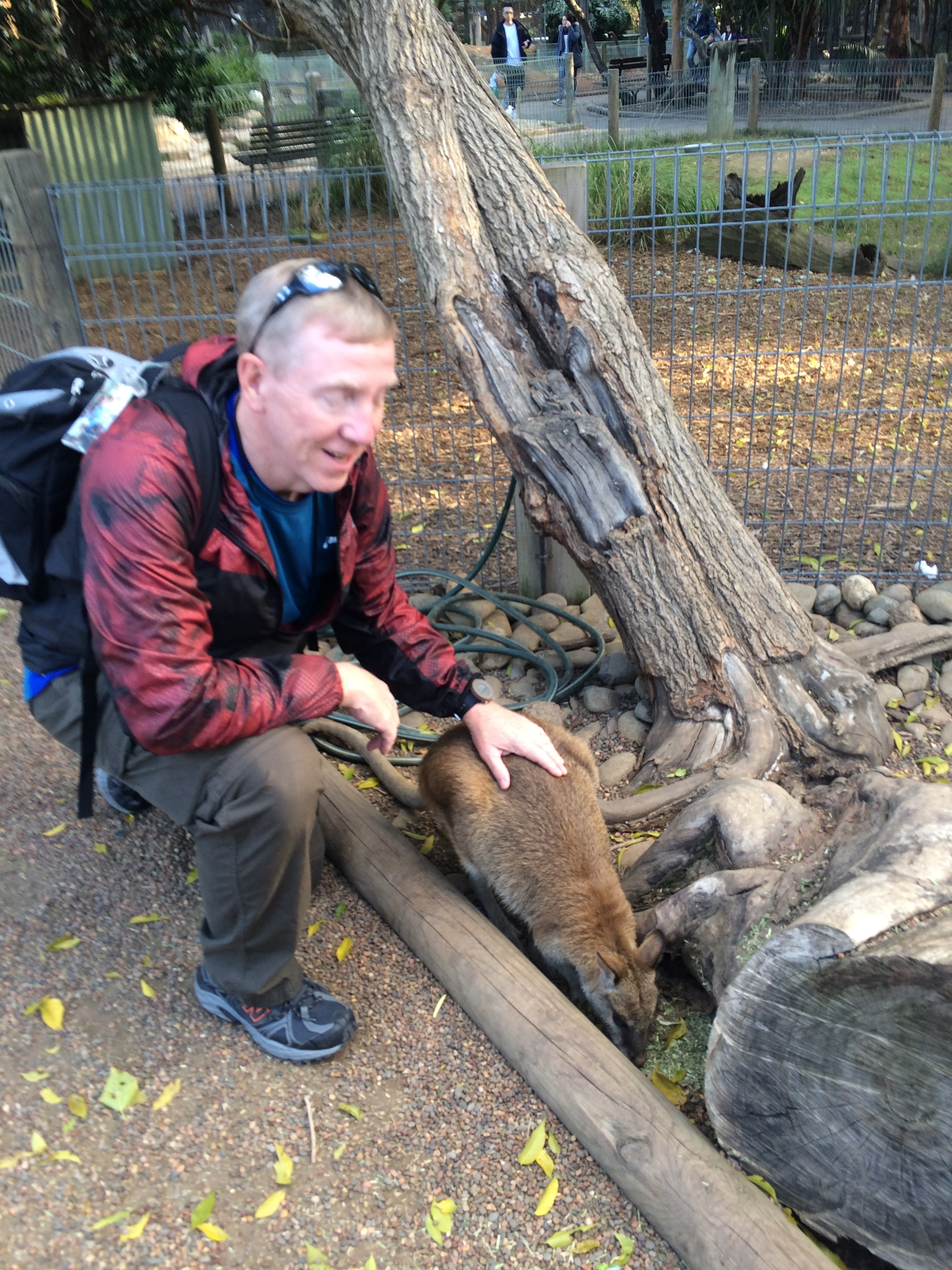 Chip and the Kangaroos