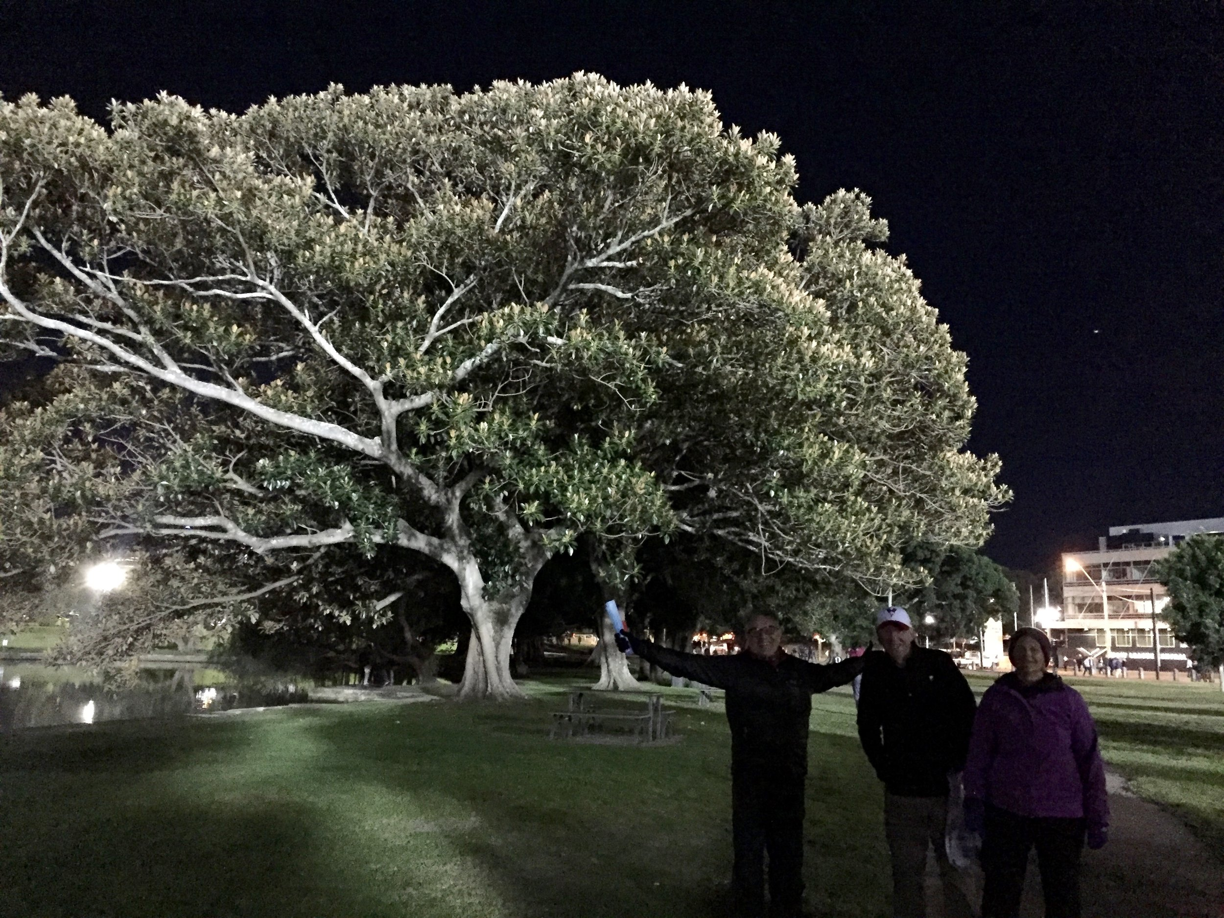 One of Sydney's weird trees