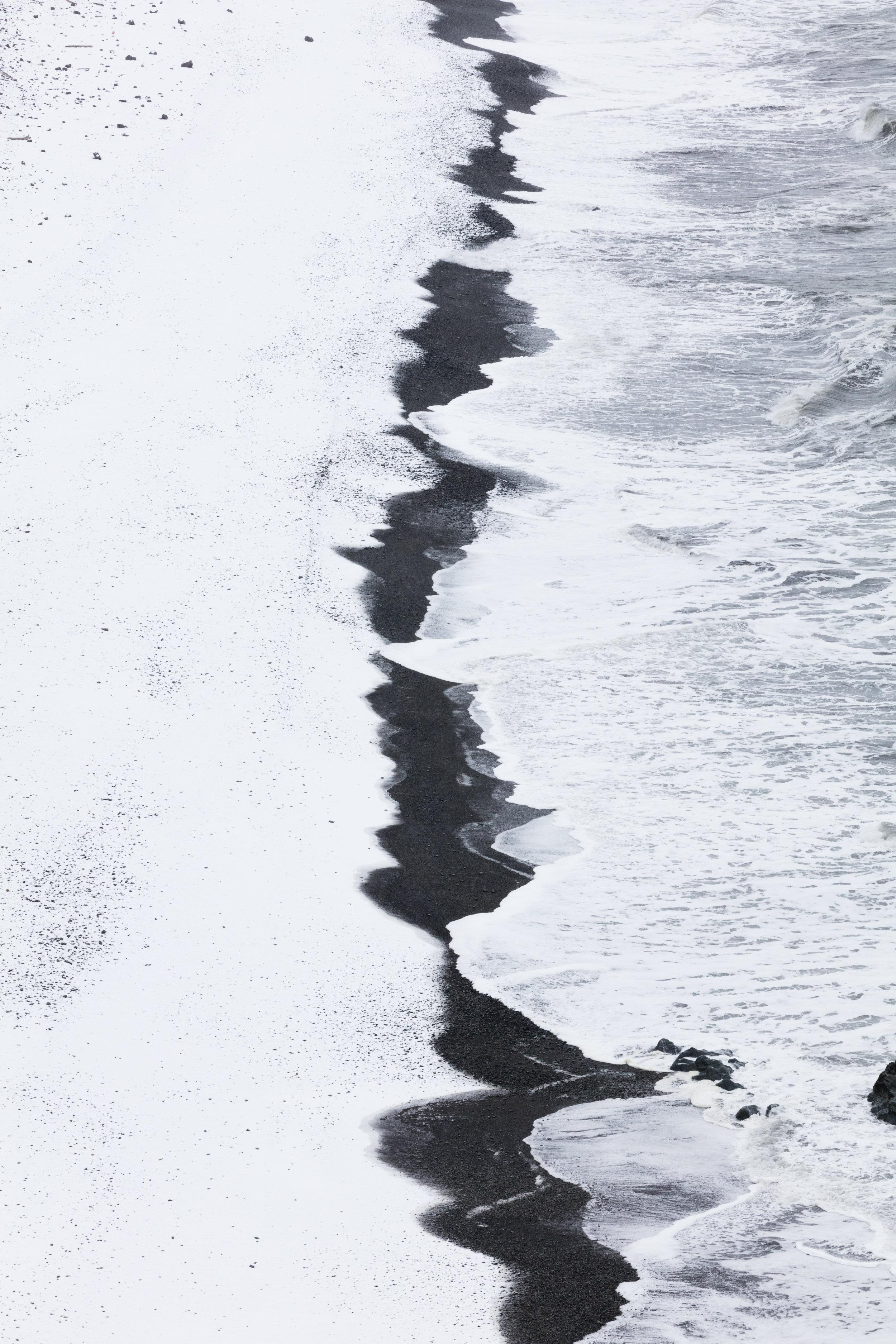 North Atlantic Ocean | East Iceland - Faune