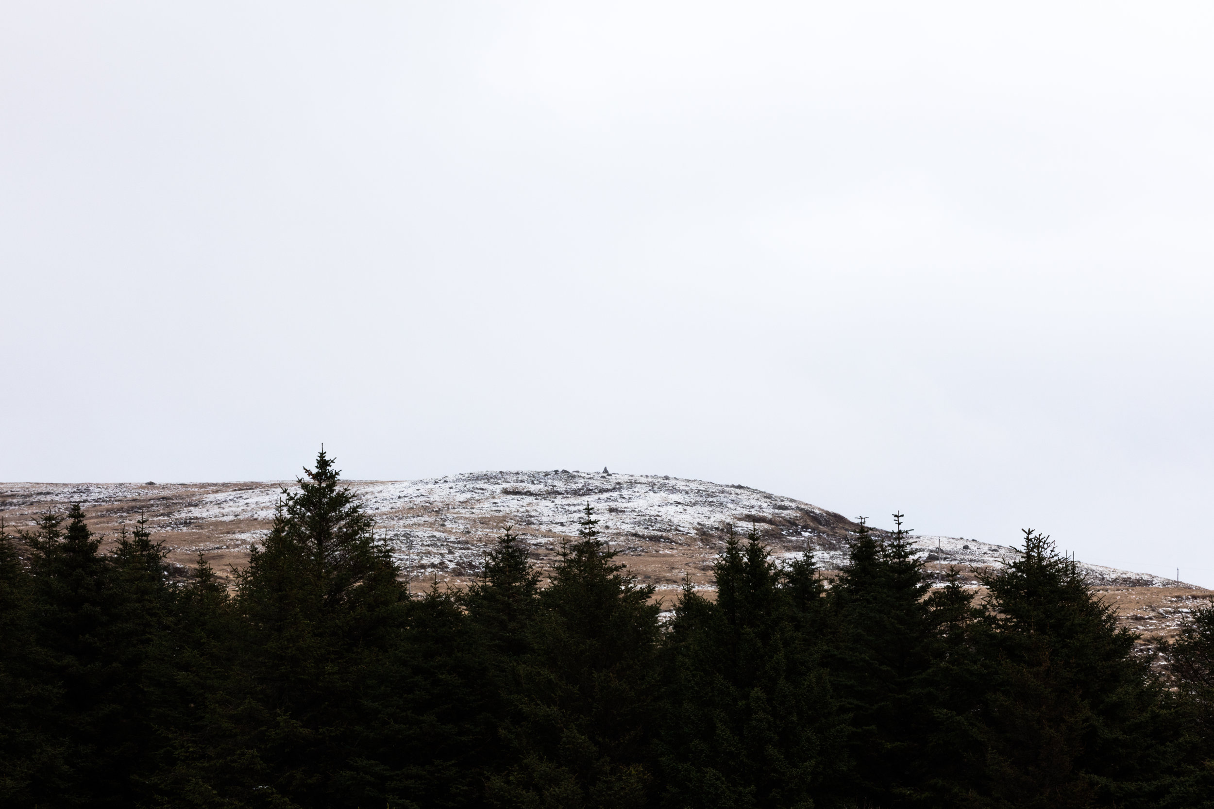 Iceland's growing Forests | East Iceland - Faune