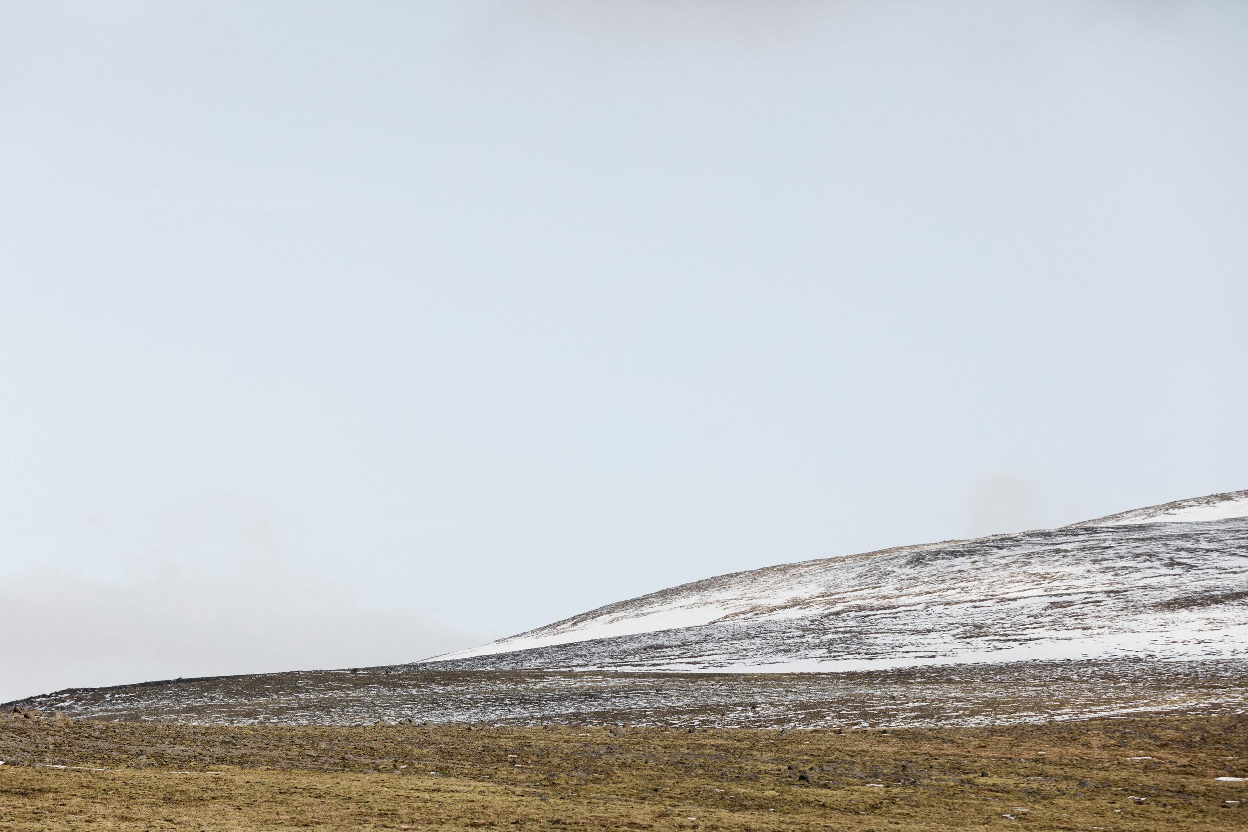 The Fox Plateau - Faune