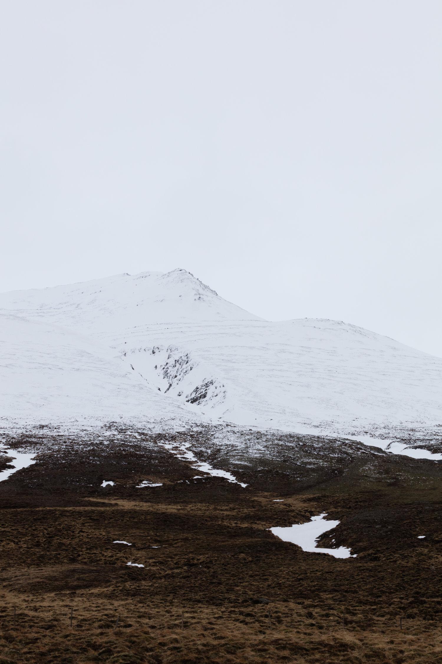 Landscapes+North+Iceland+-+Faune.jpg