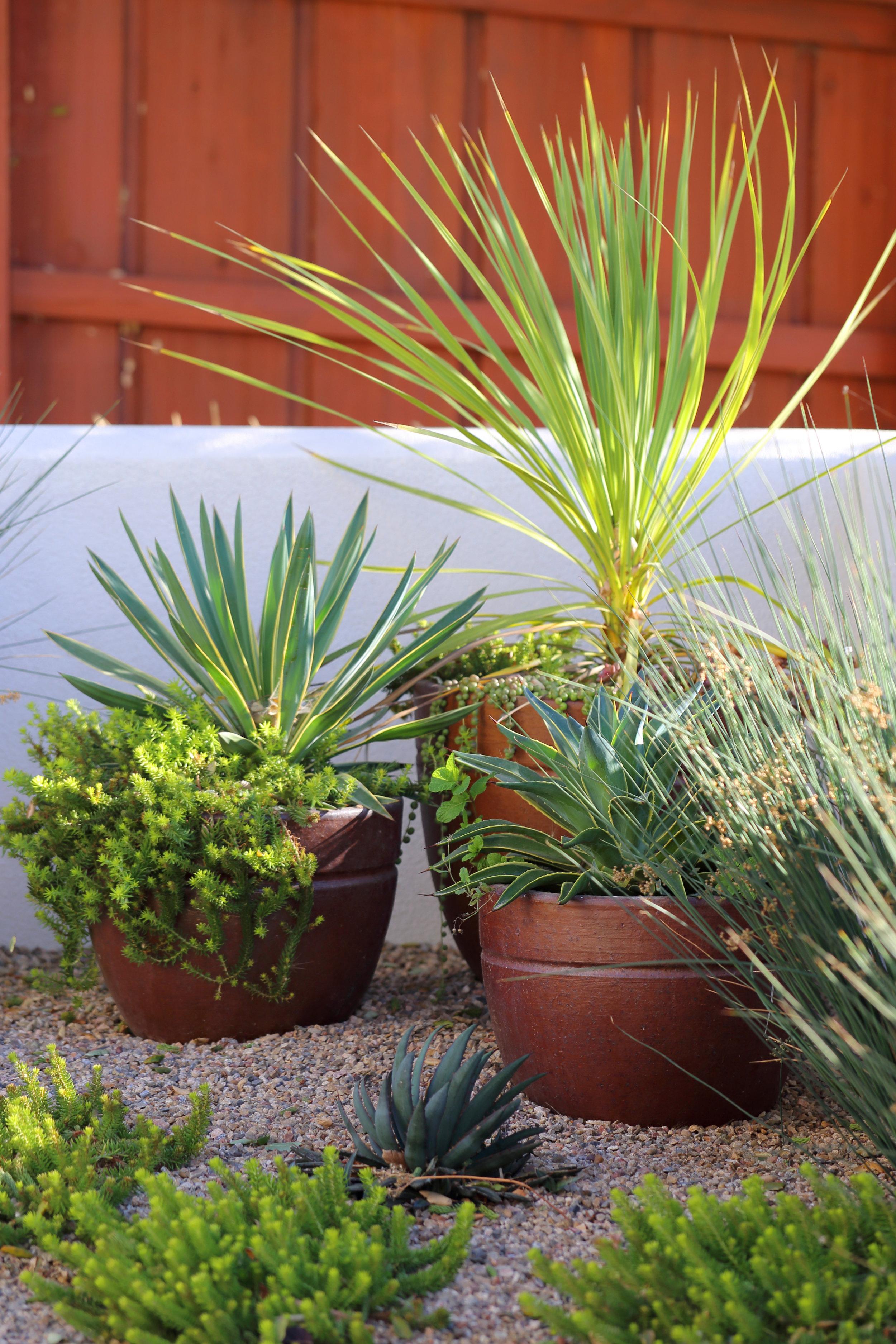 San Luis Obispo Landscape Design Mediterranean Modern