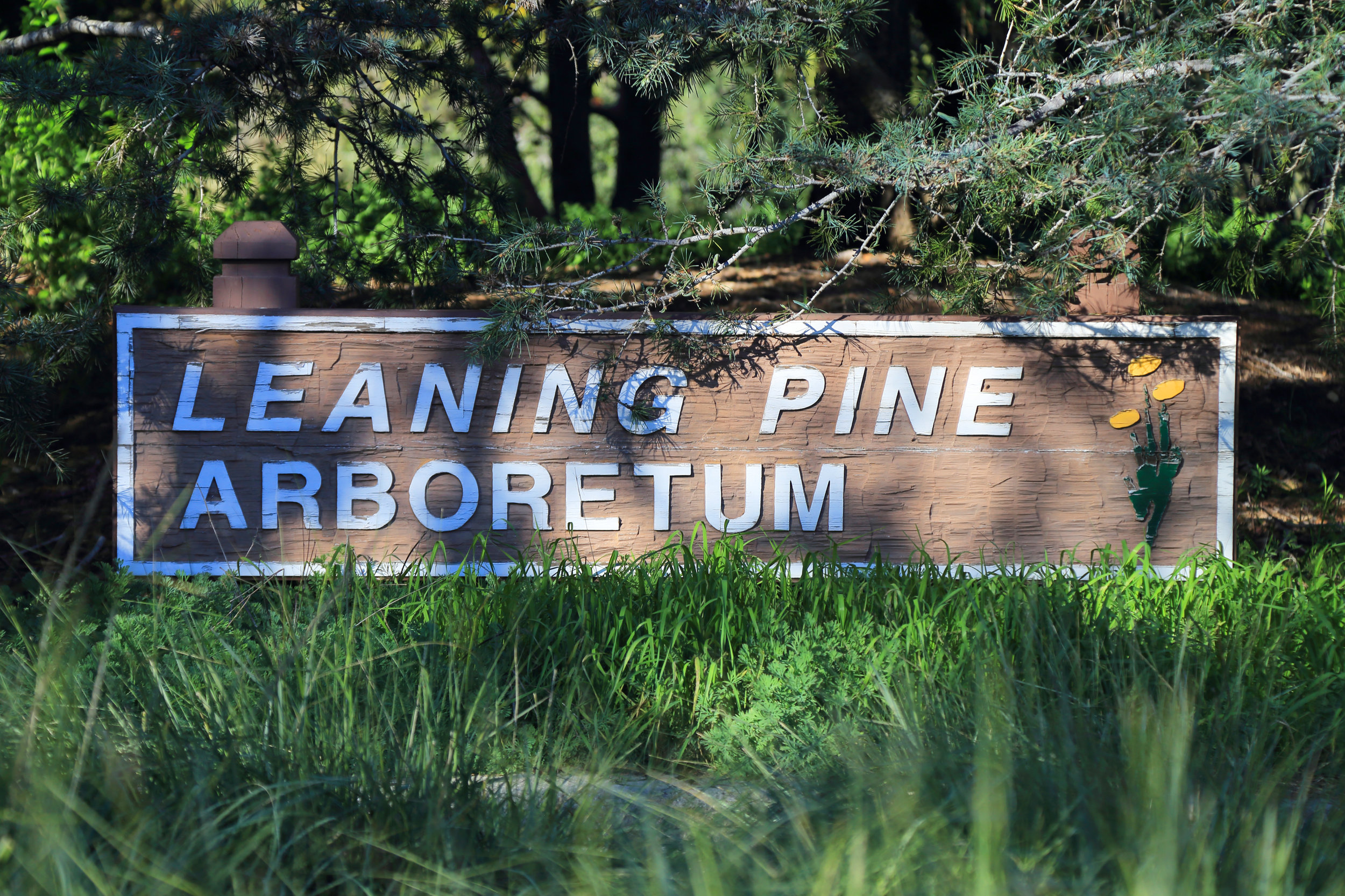 Welcome to Leaning Pine Arboretum