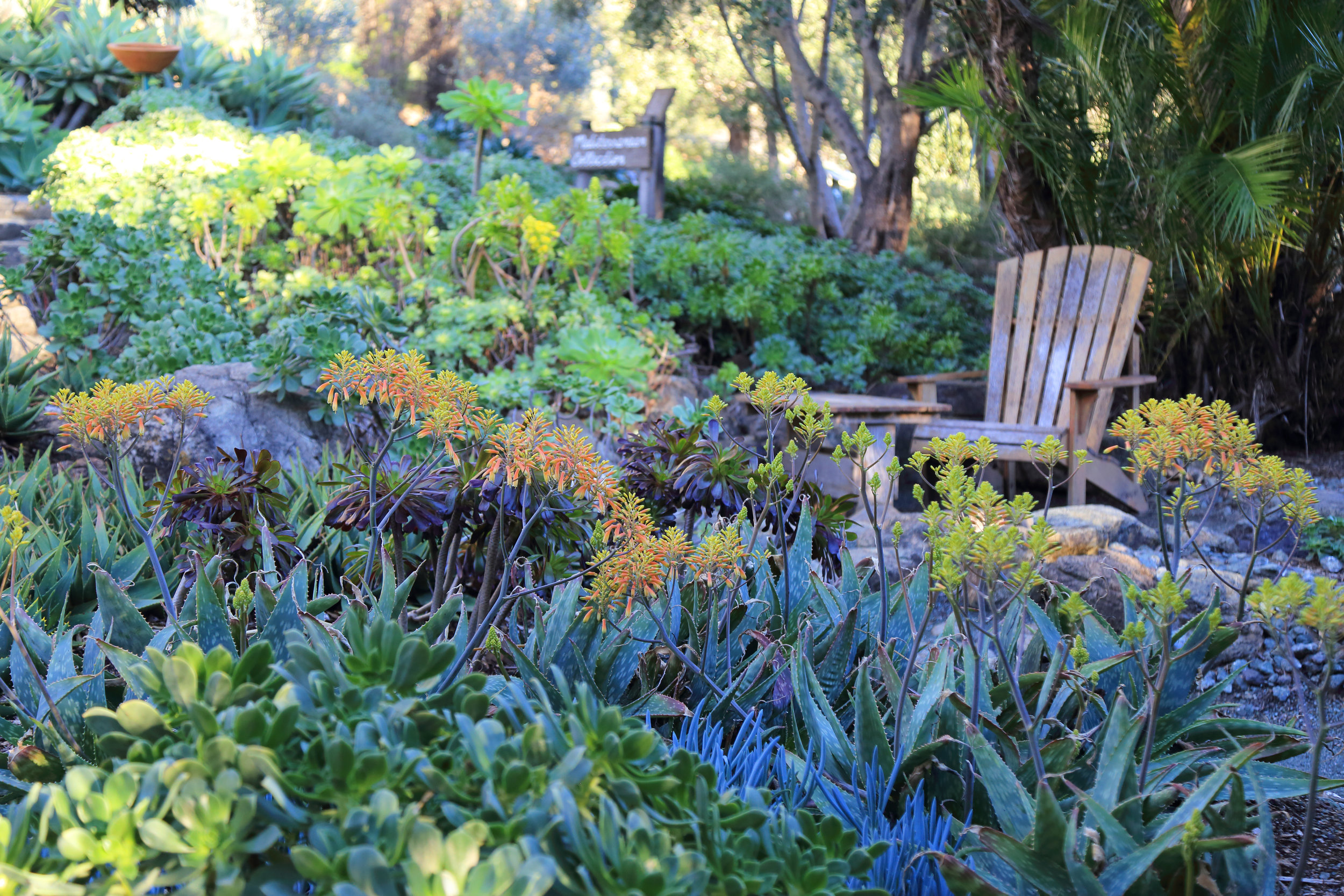 A succulent-surrounded seating area