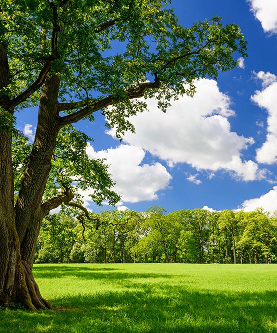 tree-park.jpg