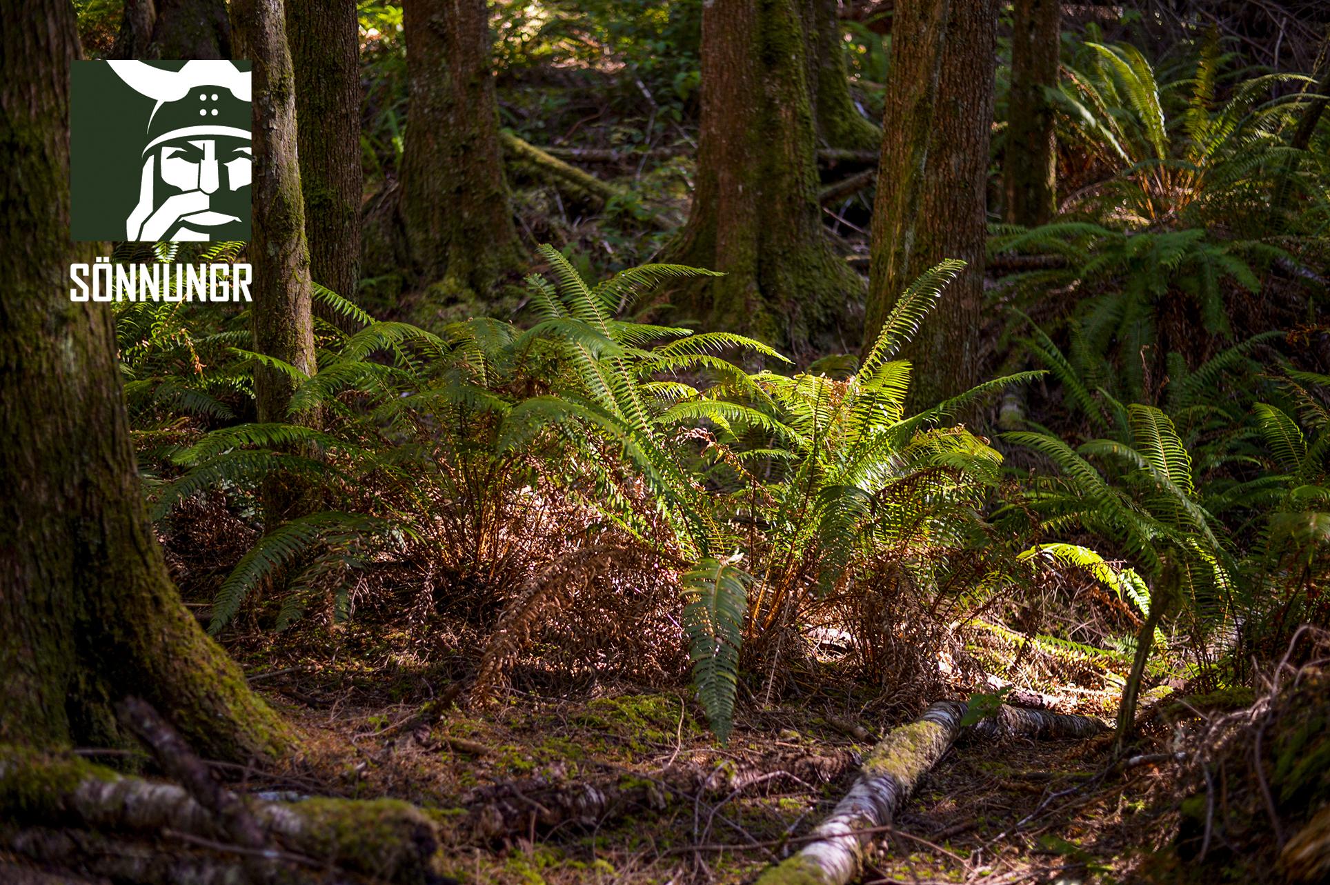 viking_forest.jpg