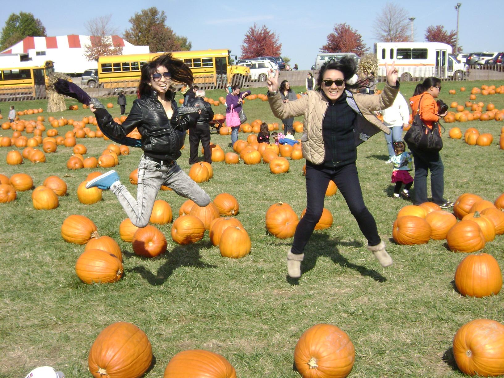 pumpkin farm.JPG