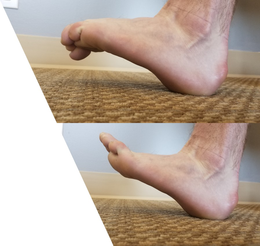 Ankle Dorsiflexion - Keep heel in contact with the floor and lift the top of the foot up towards the knee. For the 1st version, curl the toes once the foot is raised, without letting the foot drop. For the 2nd version, drive the toes up even more once the foot is raised.