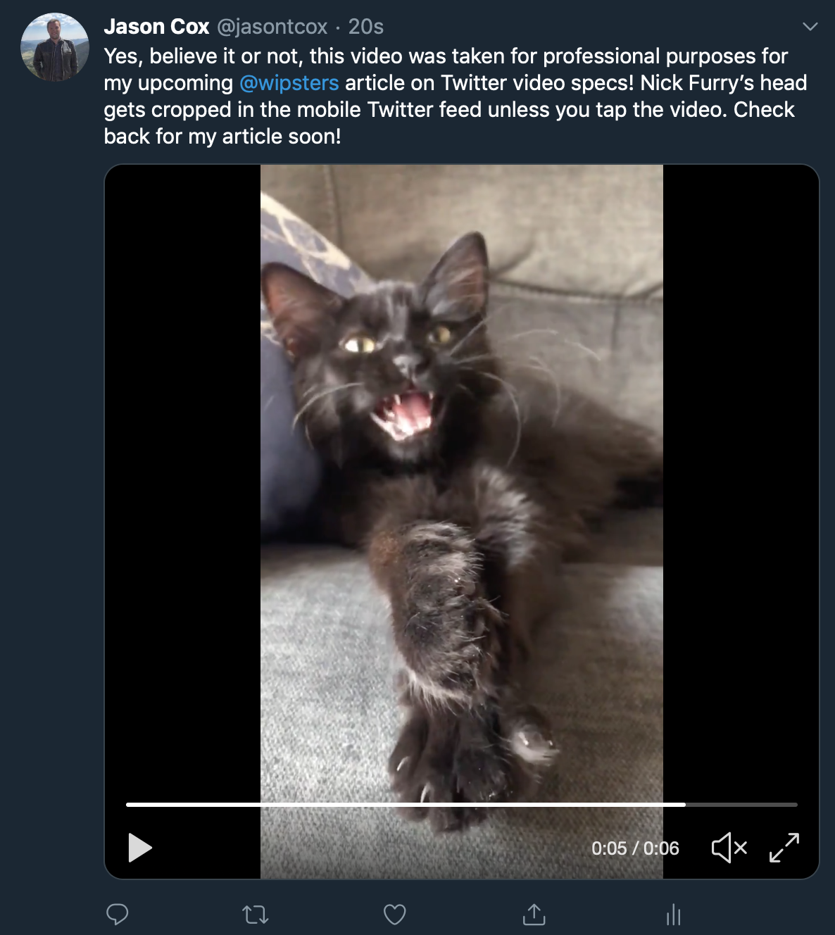 Vertical video is not cropped in a desktop browser Twitter feed.