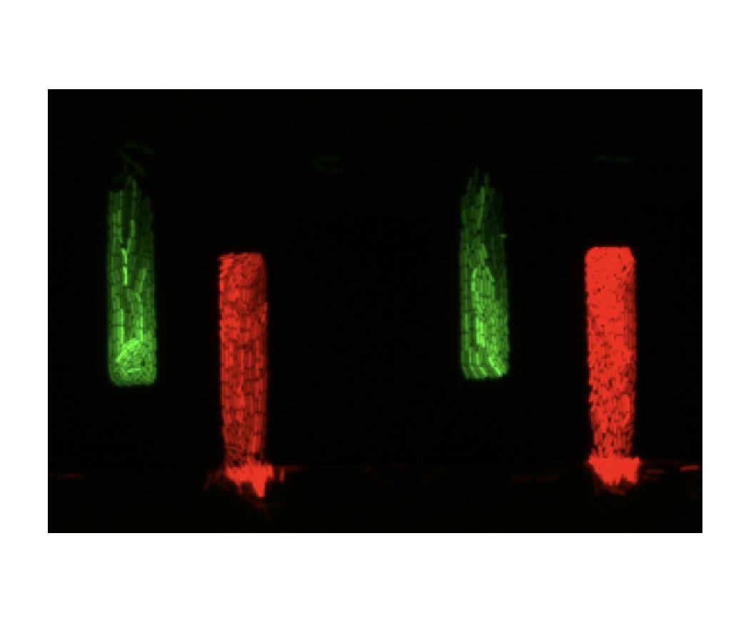 microfluidics_dark-01.png