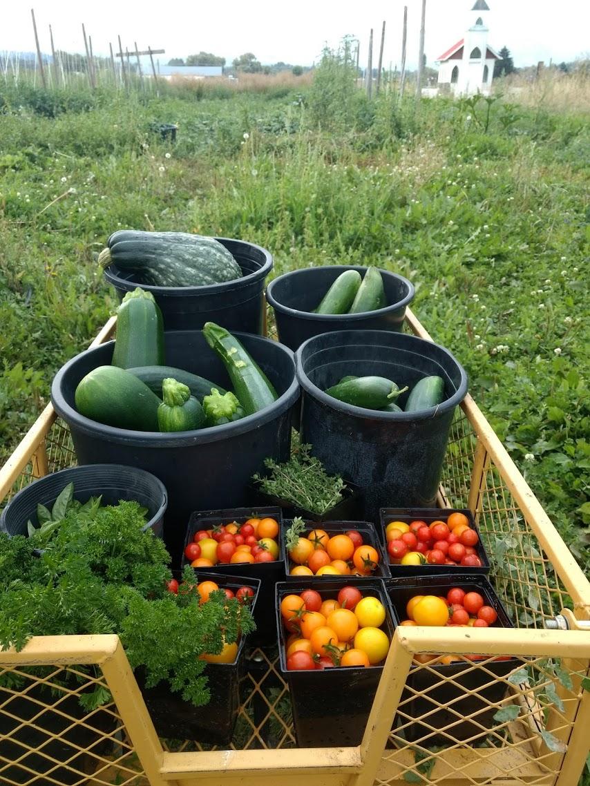 SF Farm Harvest 2018.jpg