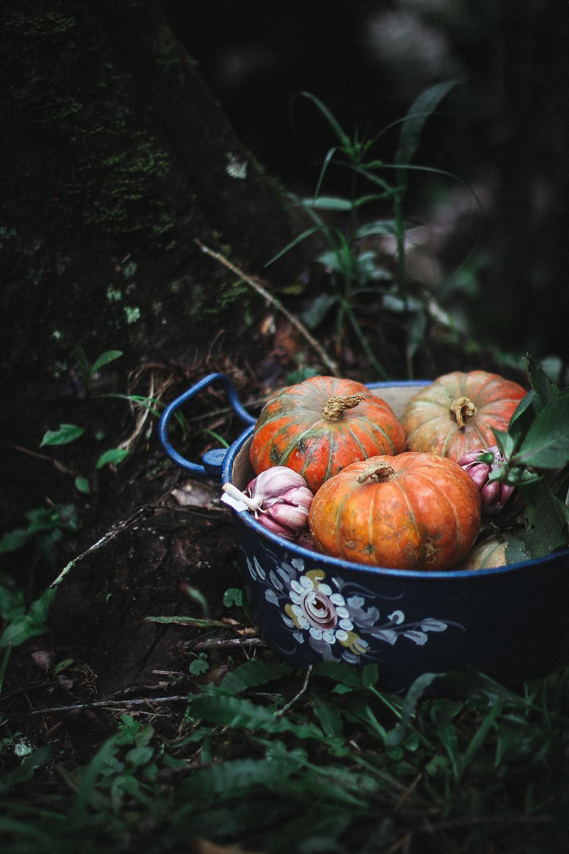 mini-pumpkins