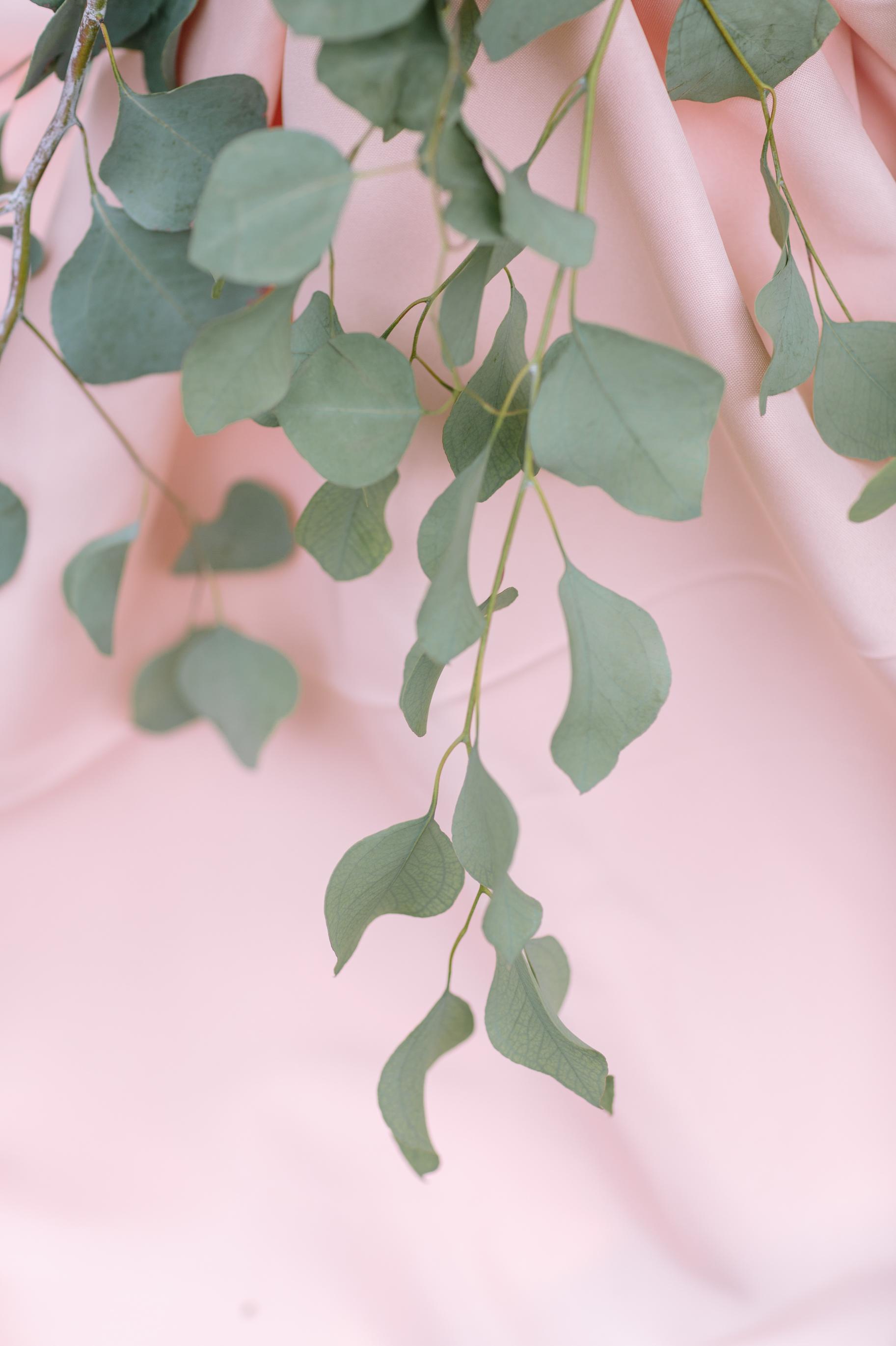 fresh-eucalyptus