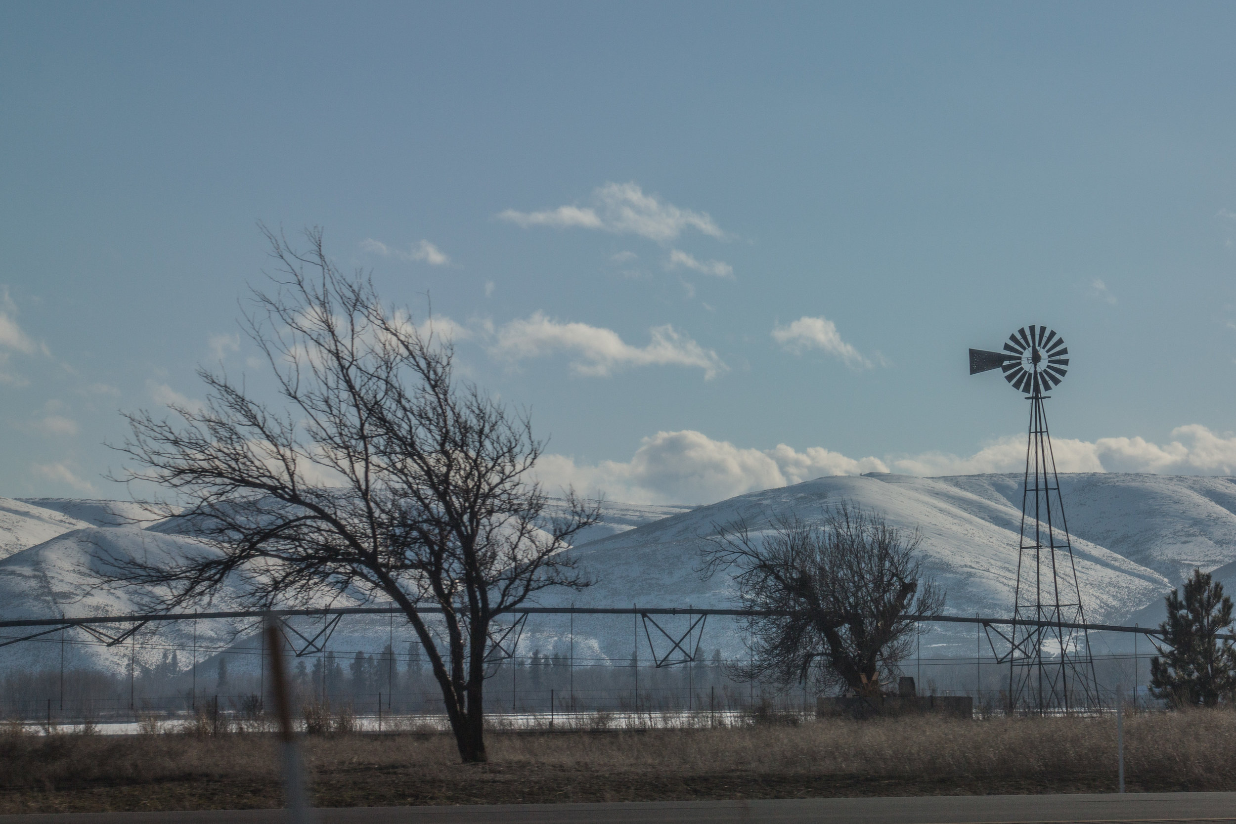 A common sight on the road to Ellensburg. Wind bent trees and weathervanes.