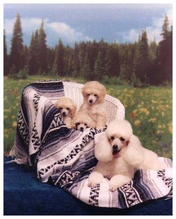 Noelle & her babies