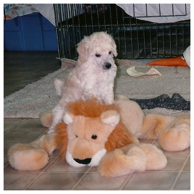 Baby Harry & the Lion