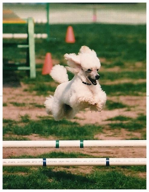 Dreamer loves jumping
