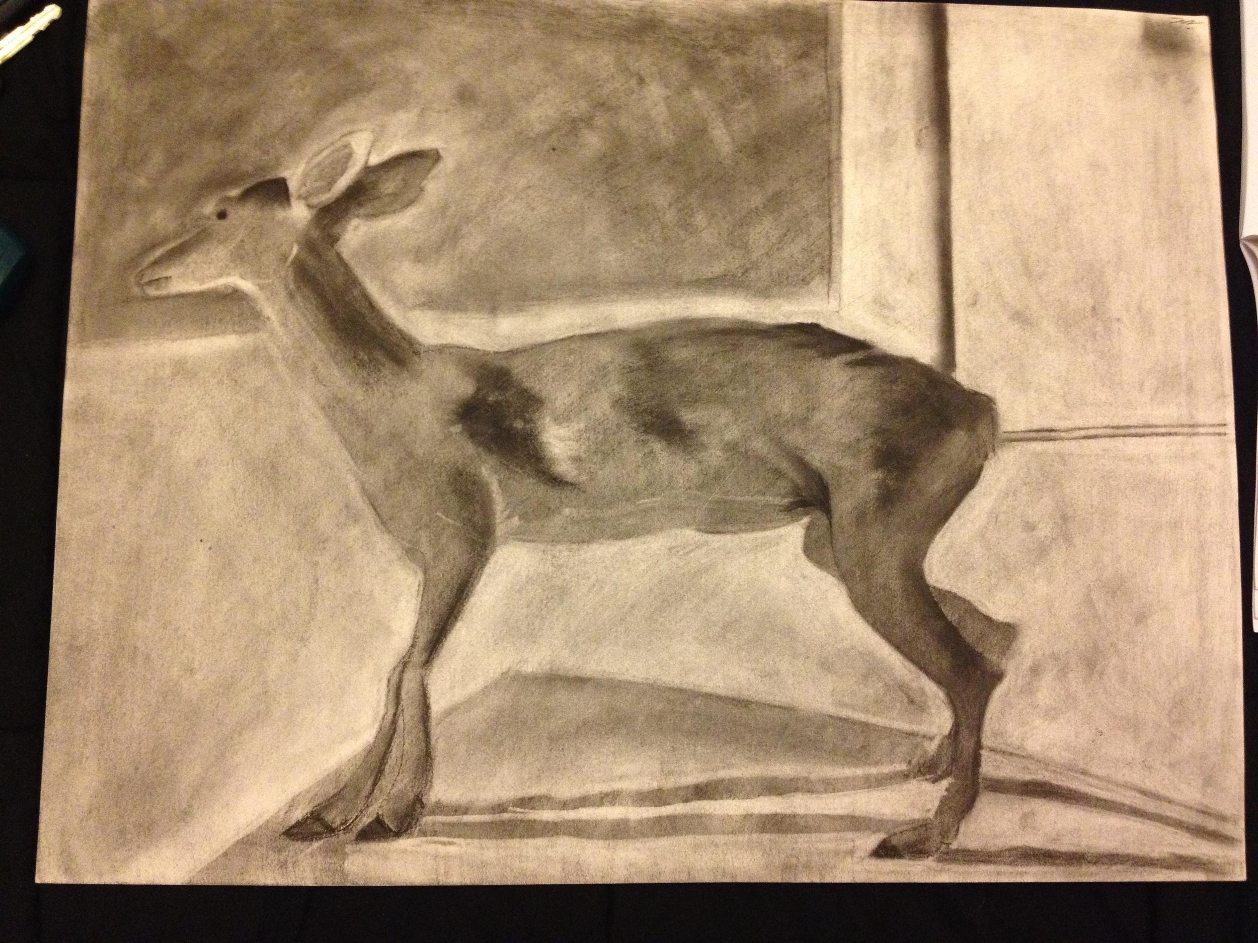 Deer  -Charcoal on paper - 2003