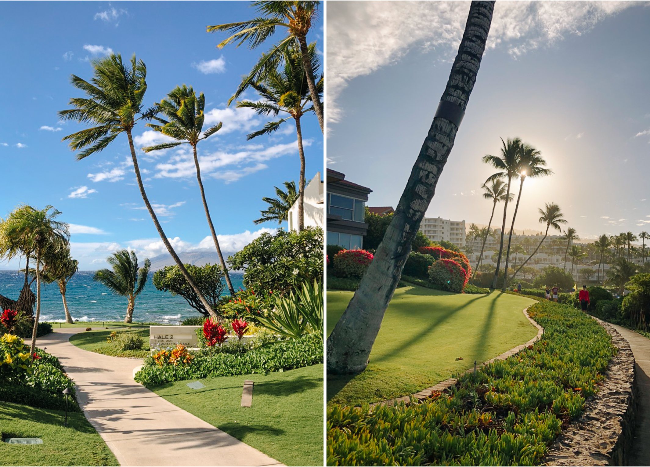 Hawaii_Maui_Dragana_P-13.jpg
