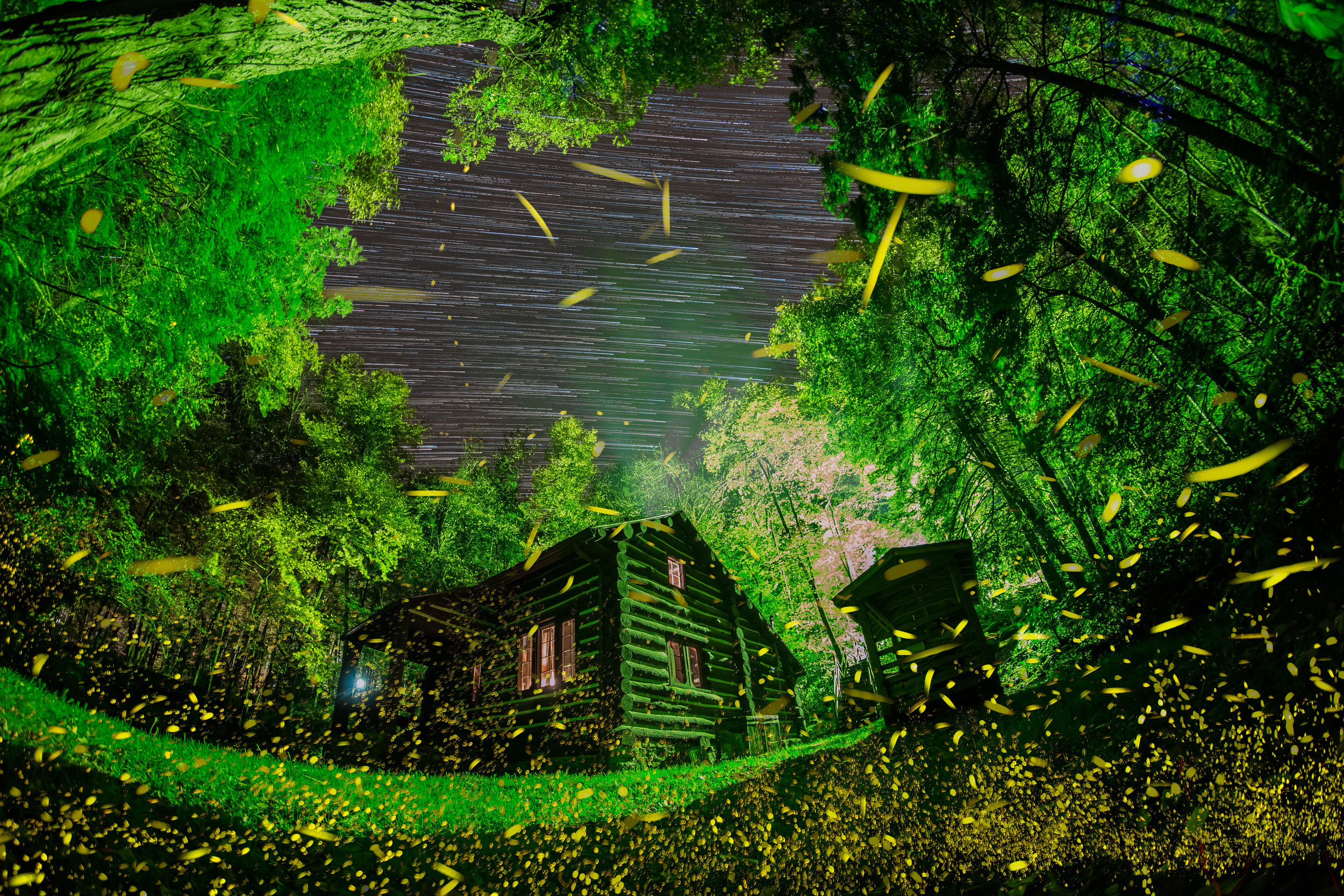 Fireflies in the Blue Ridge Mountains