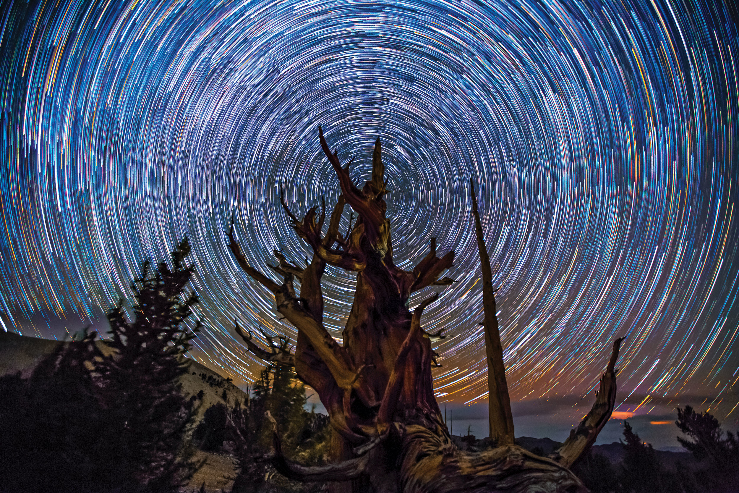 BRISTLECONE | Inyo National Forest, California |  BUY PHOTO PRINT