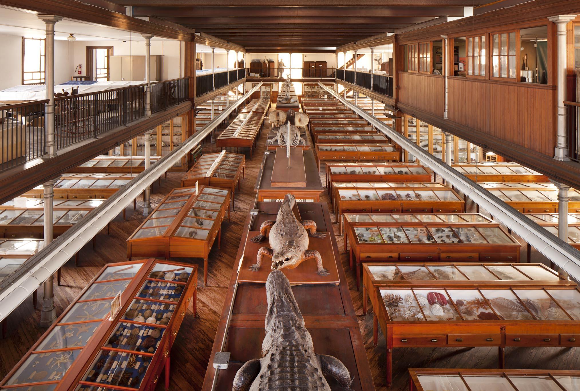 Wagner Free Institute of Science.jpg