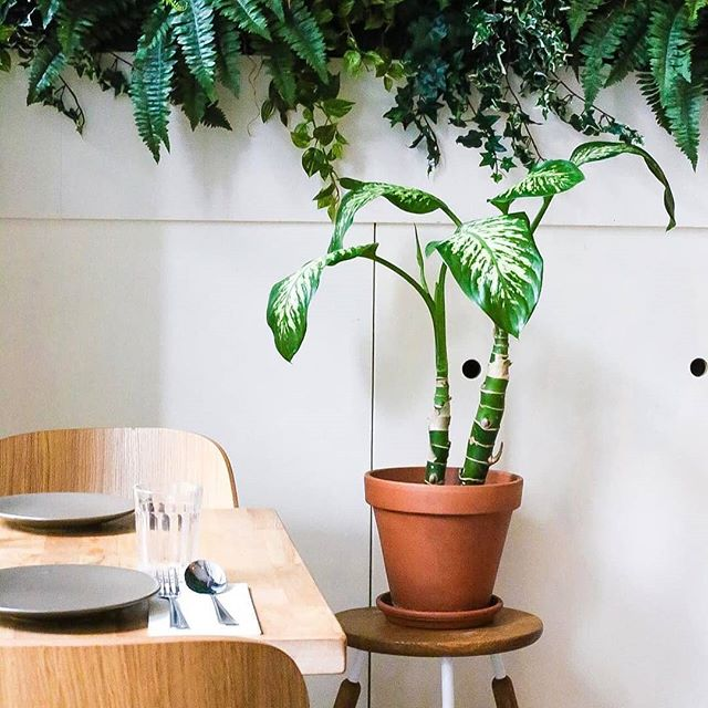 The daily view in our green oasis of the Kinkerstraat 🌴 Come share in our good vibes for dinner and drinks tonight! 🍸 Picture by @lisedeboer . . . #CafeAmoi #kinkerstraat #jungle #indonesia #amsterdam #food #plants #tropical #cocktails #dining #enjoy #enak #hatihati