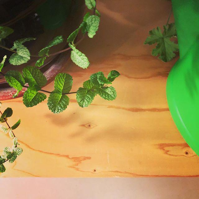 Green love at Kleinhafen Coworking 💚#kleinhafen #coworking #plantlove #green #basel #reh4