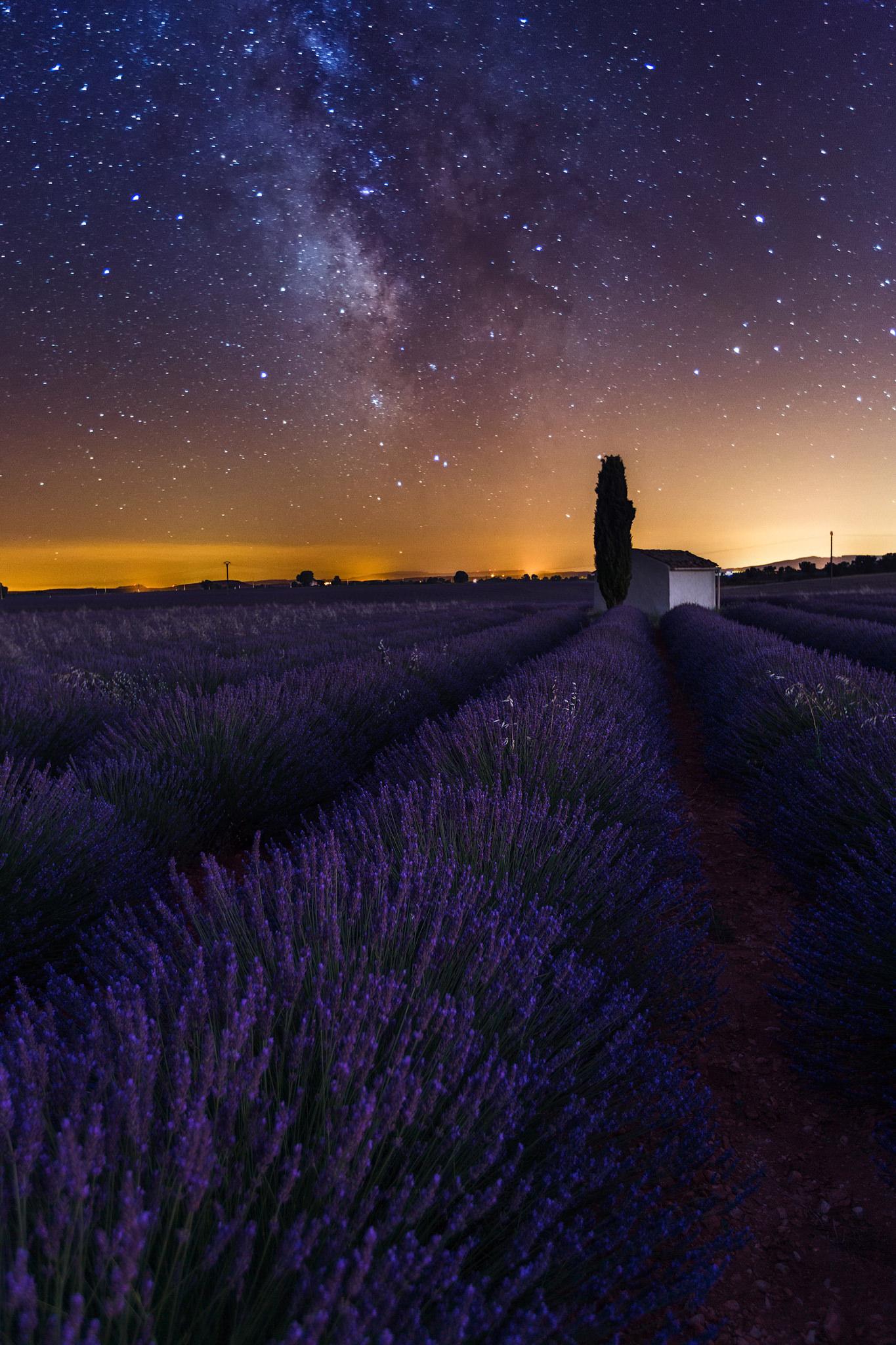 Lavender-Dream.jpg