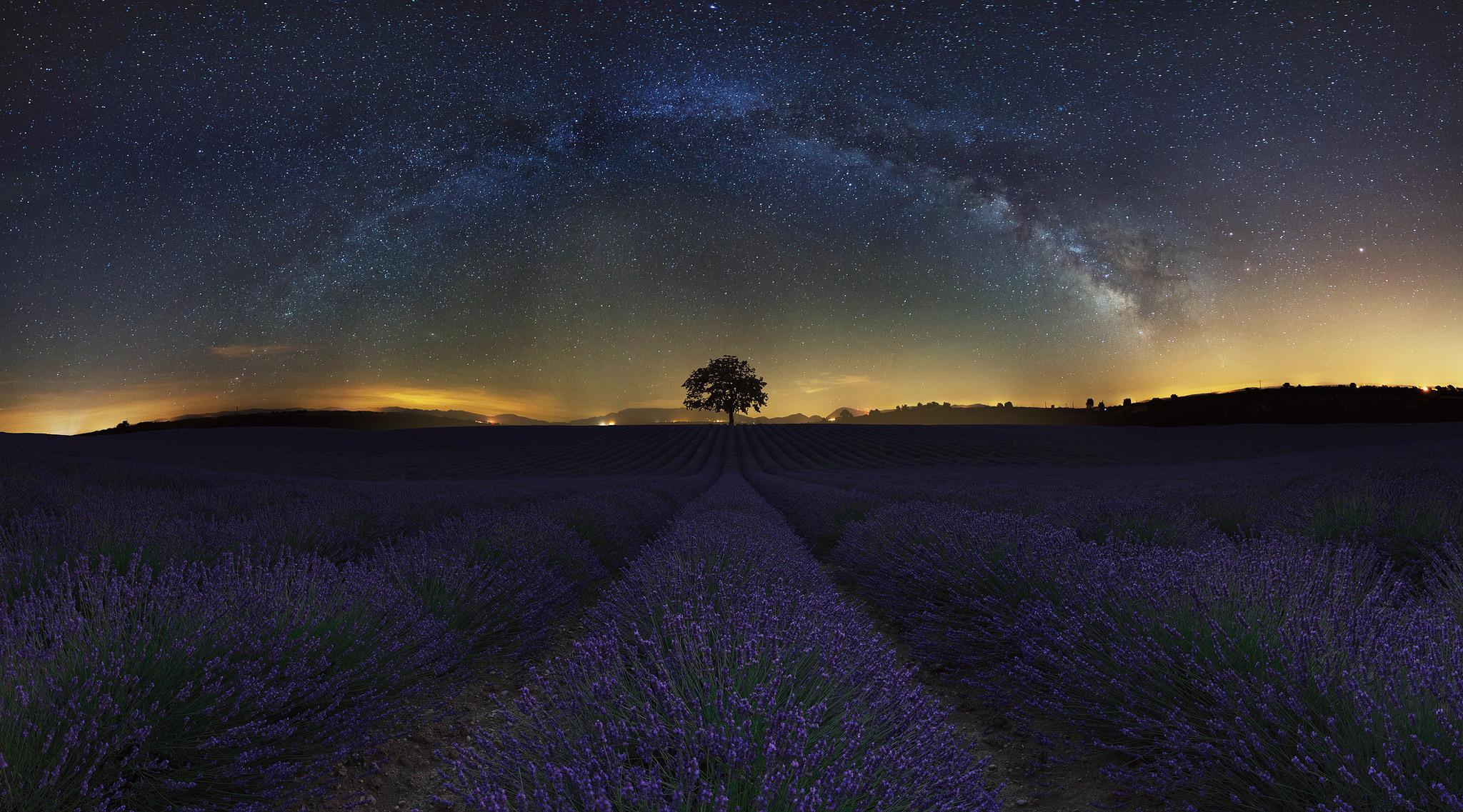 Lavender-field-under-stars.jpg