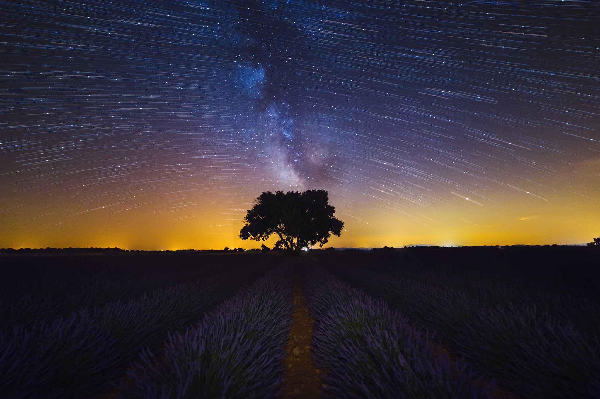 The-lonely-tree.jpg