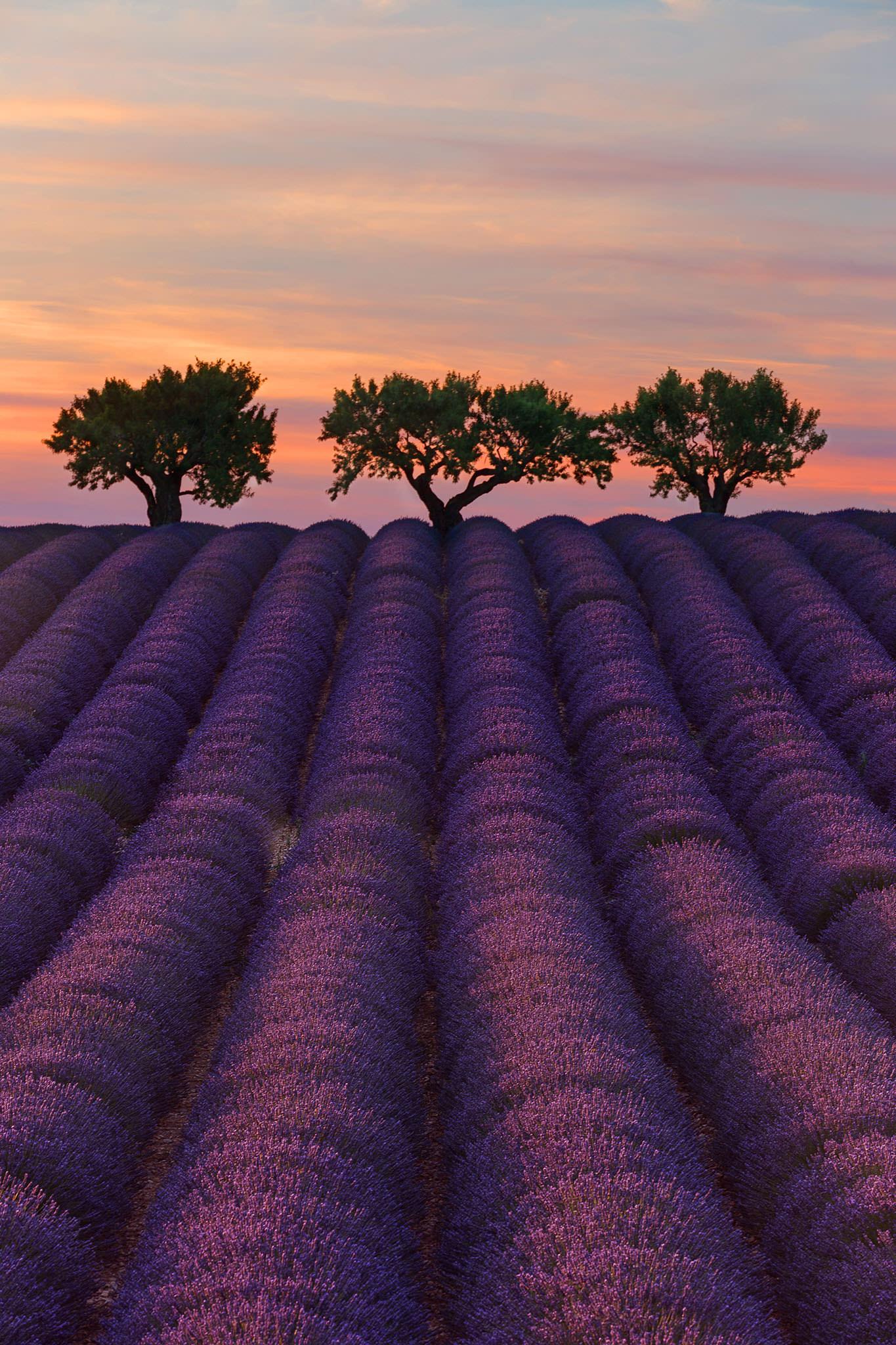 3 Treees.jpg