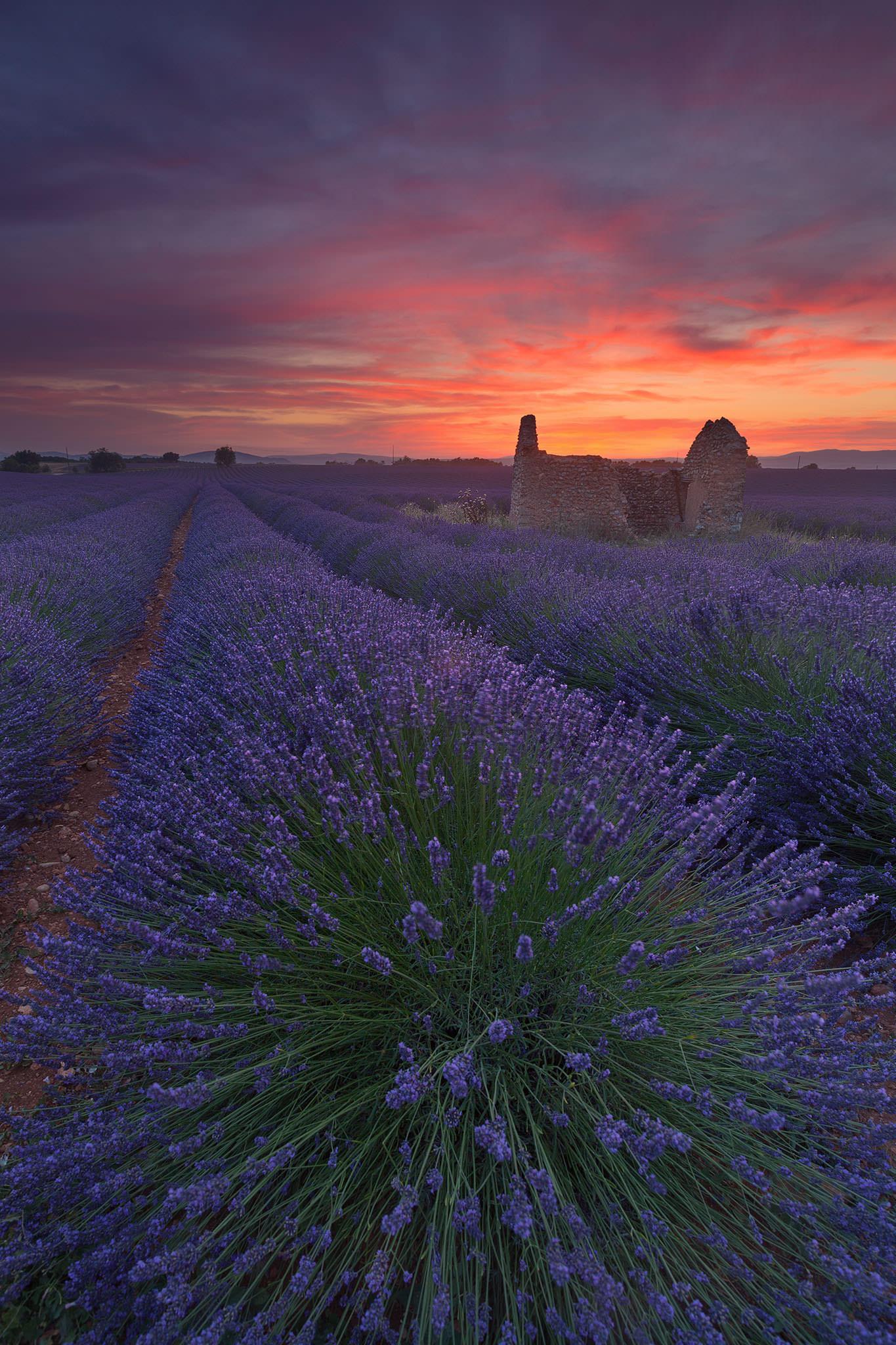 Red Lavender Field2.jpg