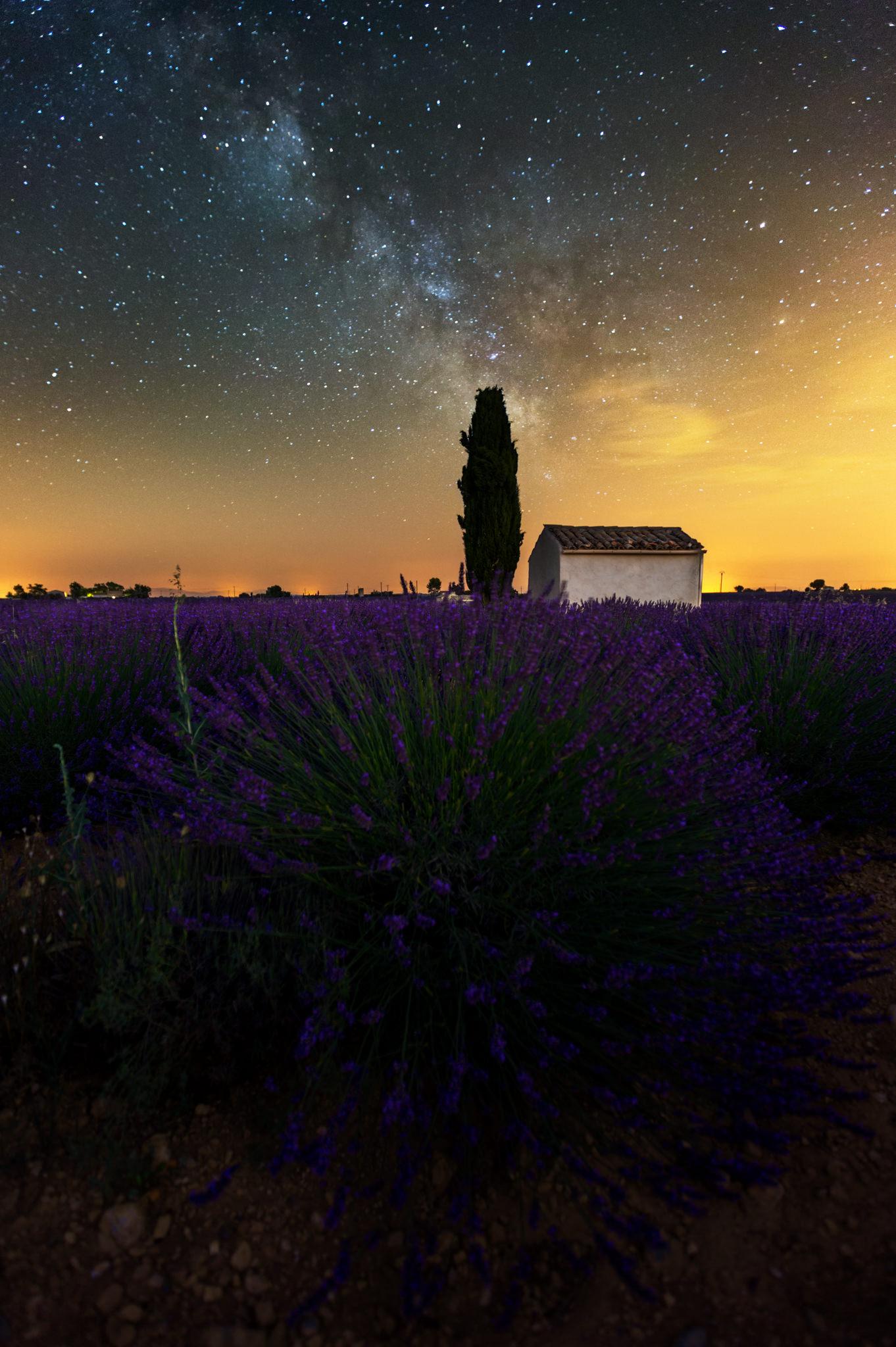 Lonely House under Lavender Stars.jpg