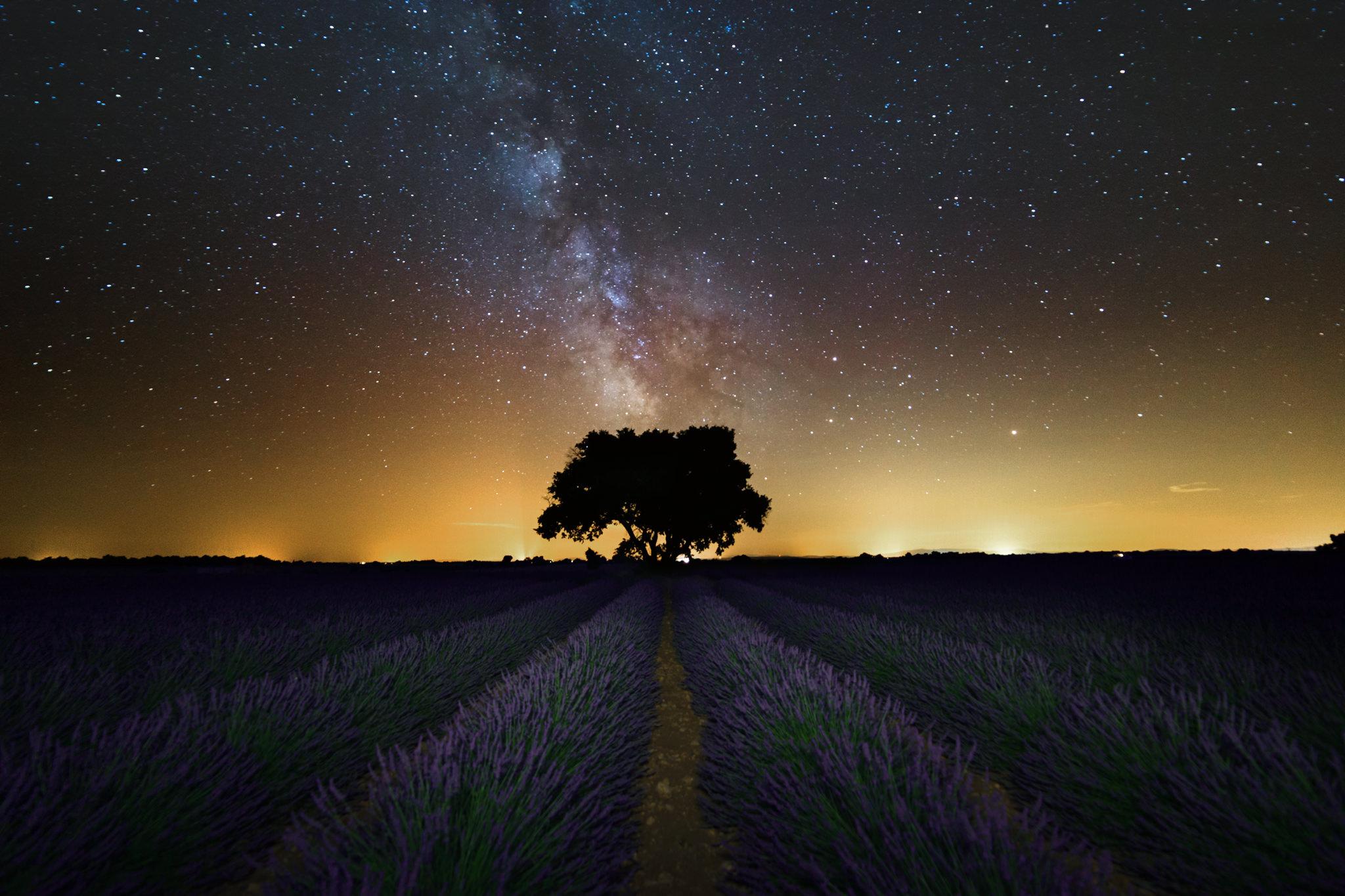 Lavender Night Star.jpg