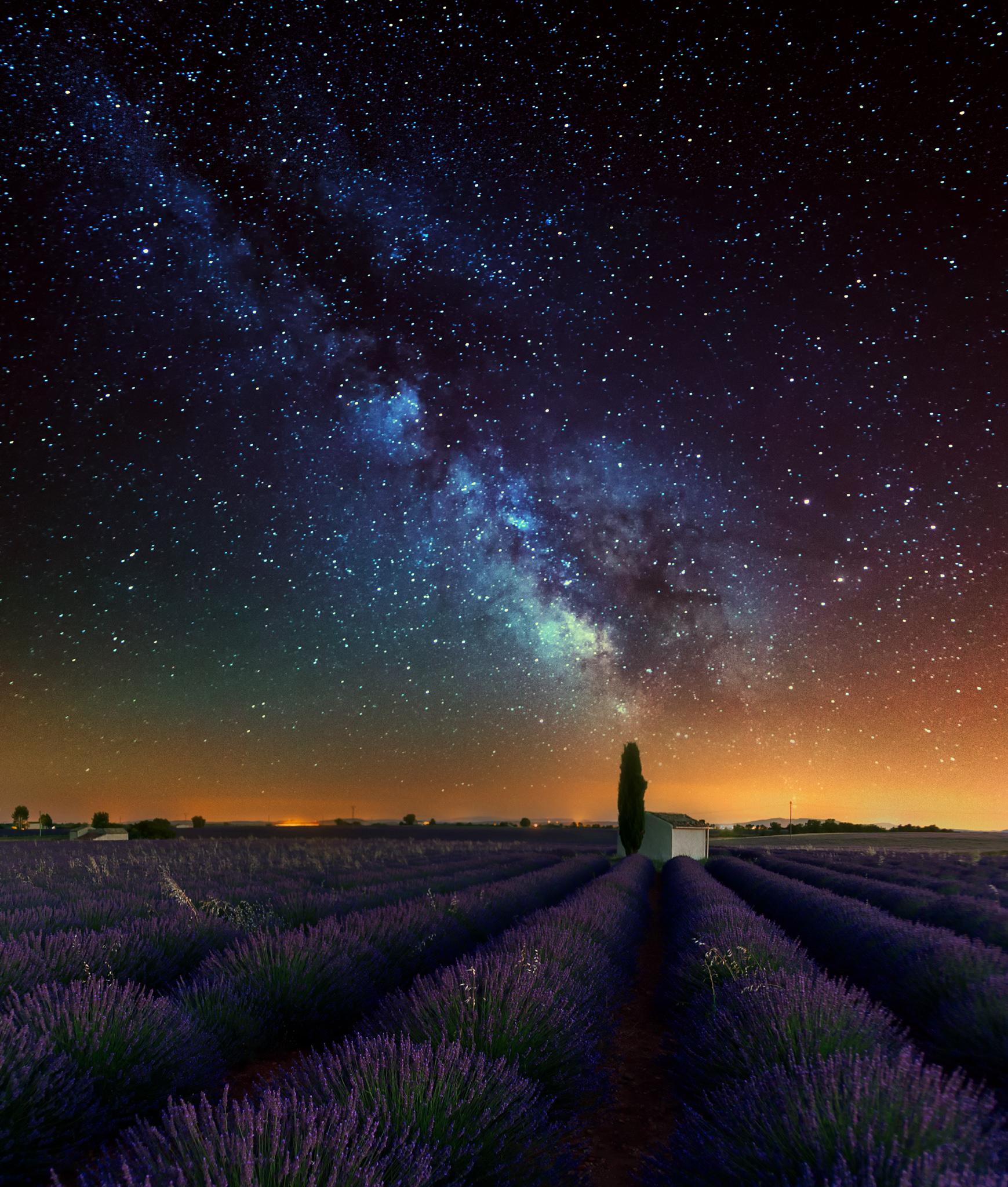 The Lavender Palette.jpg