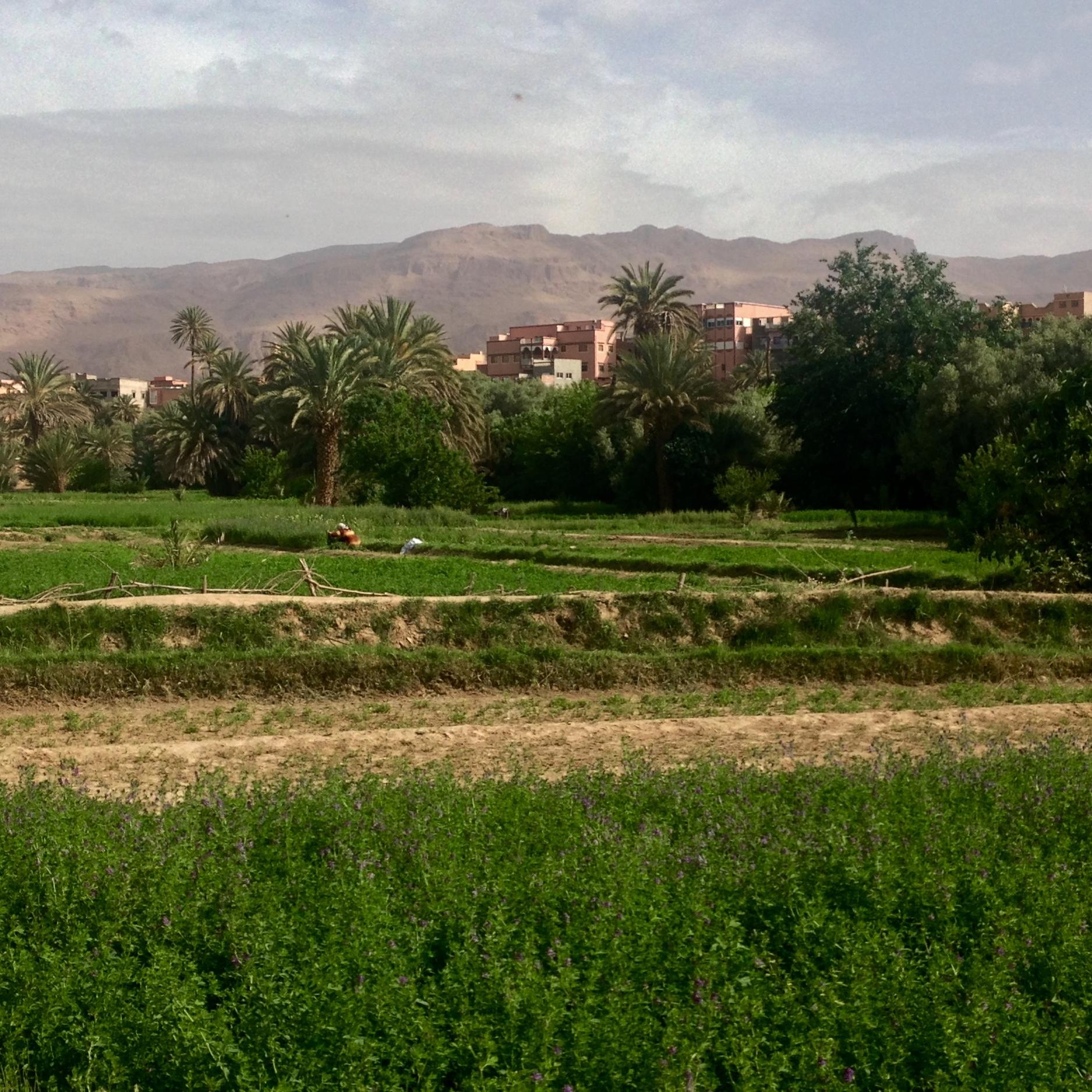 Berber Gardens