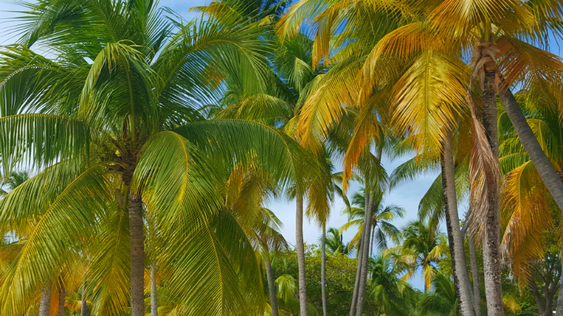 Pretty island palms